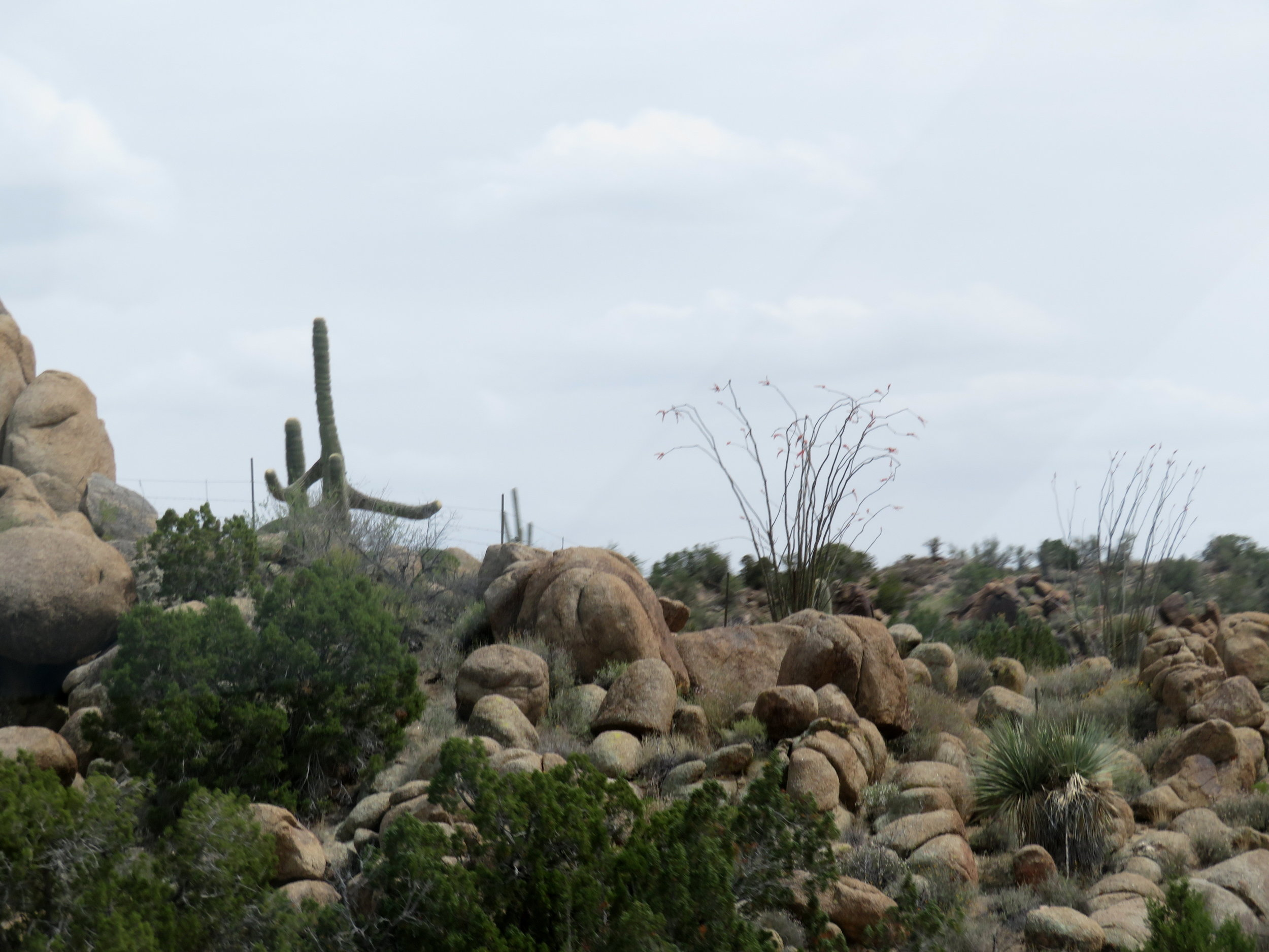 Rough desert terrain