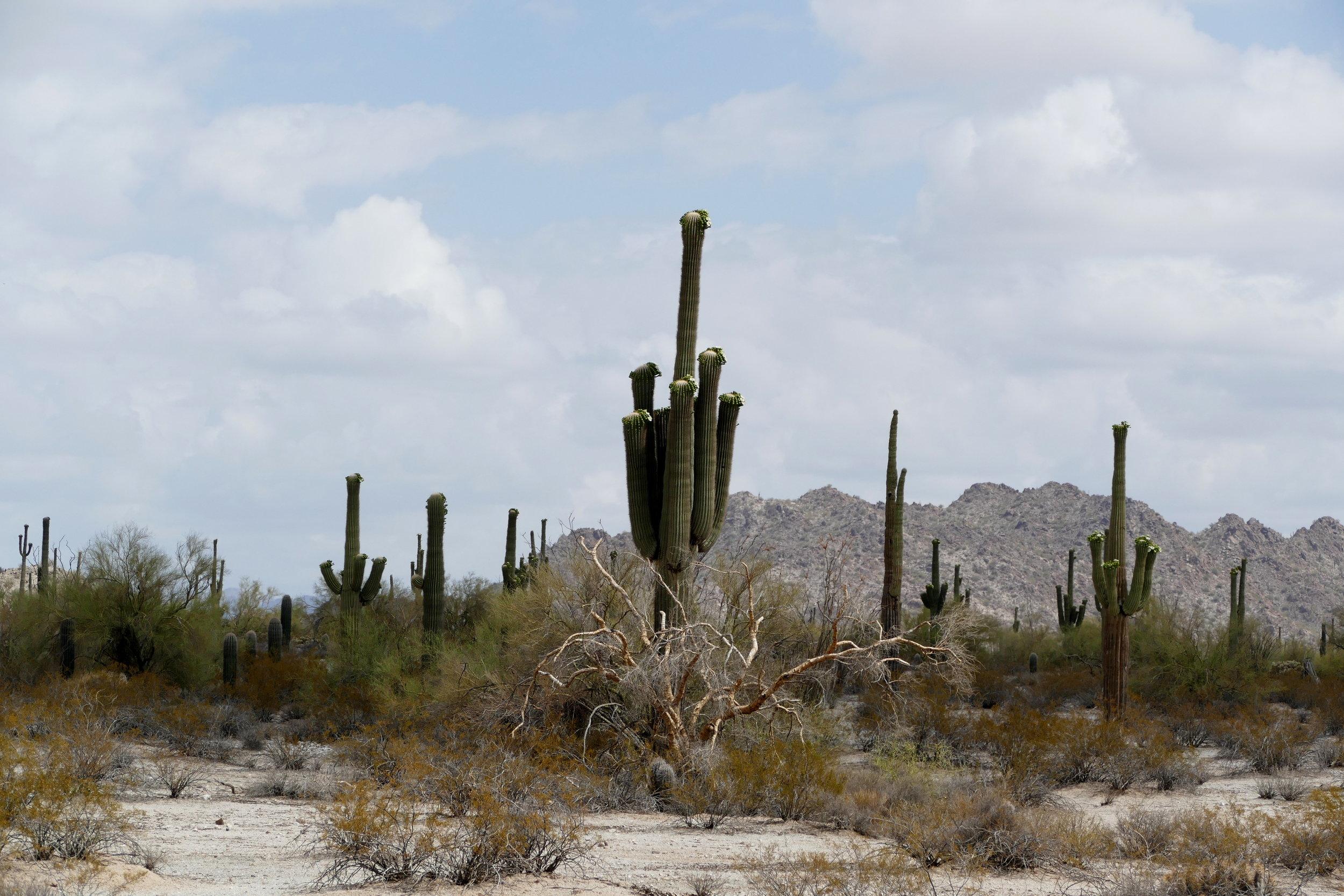 Mountainous desert terrain