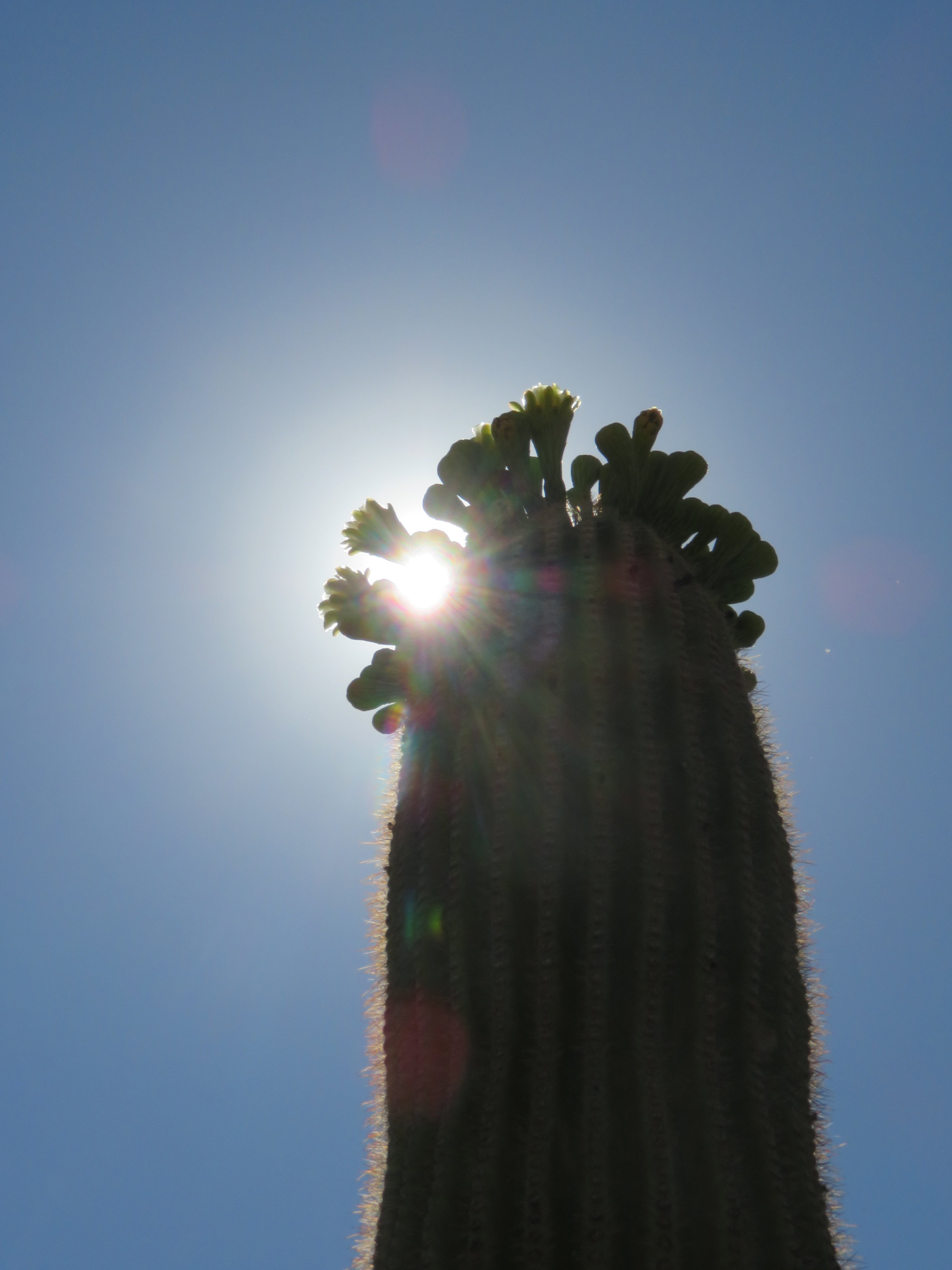 The unrelenting Sonoran Desert sun