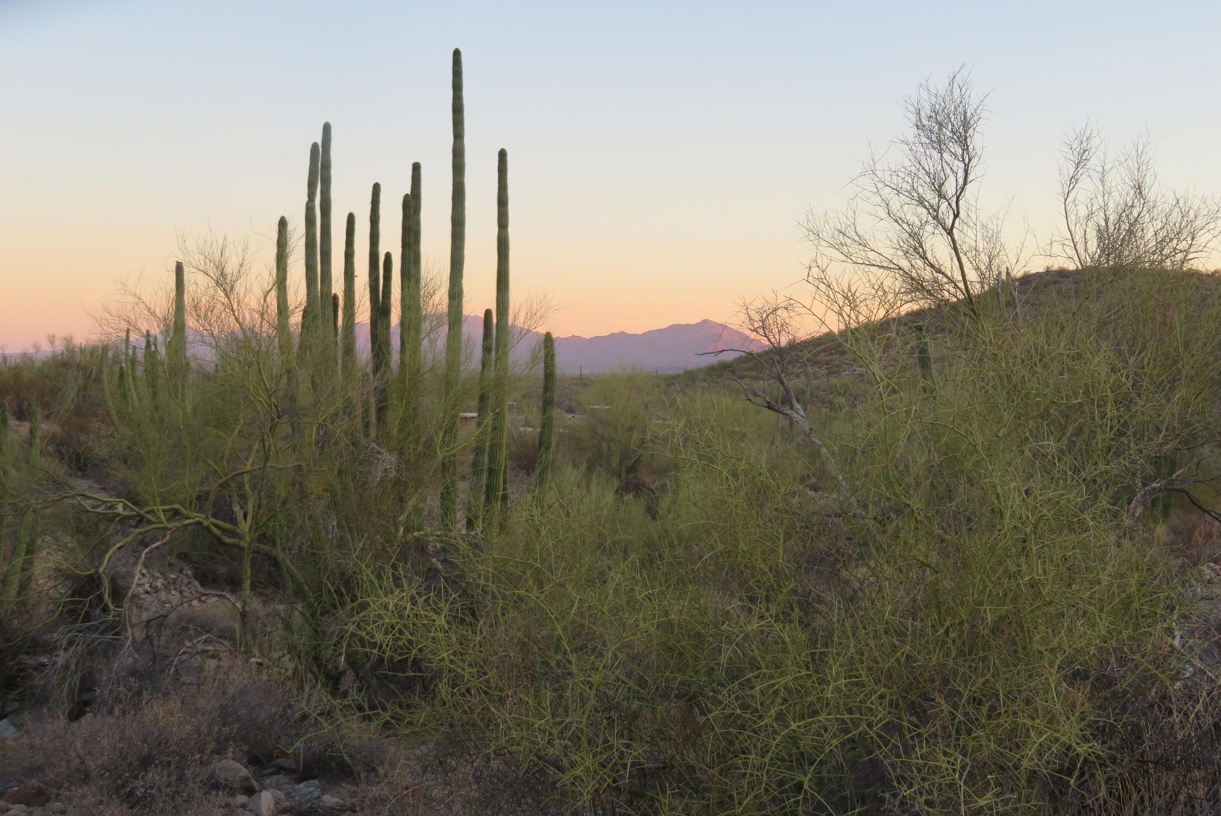Organ Pipe Cactus National Monument  - AriZona - May 2018
