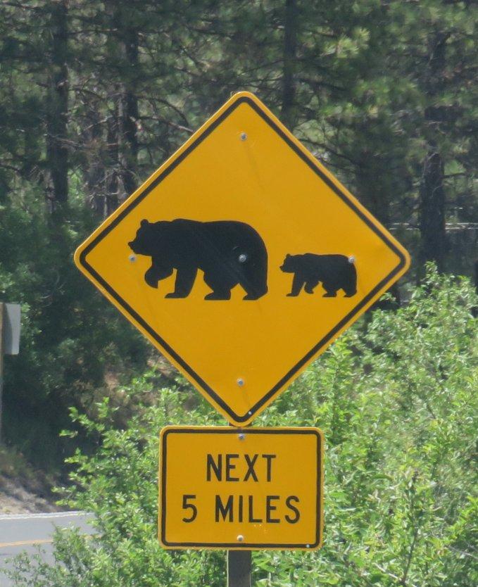 beware_bears ahead.jpg