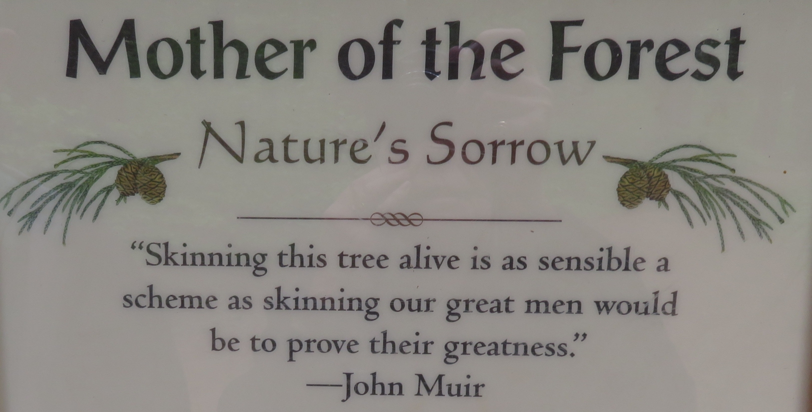 Camping-giants_muir quote mother of the forest.jpg