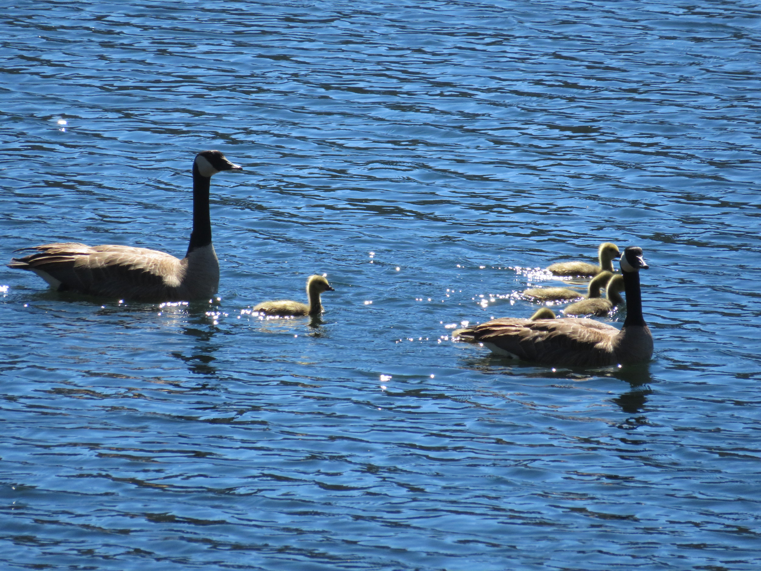 Taking the family for a morning swim