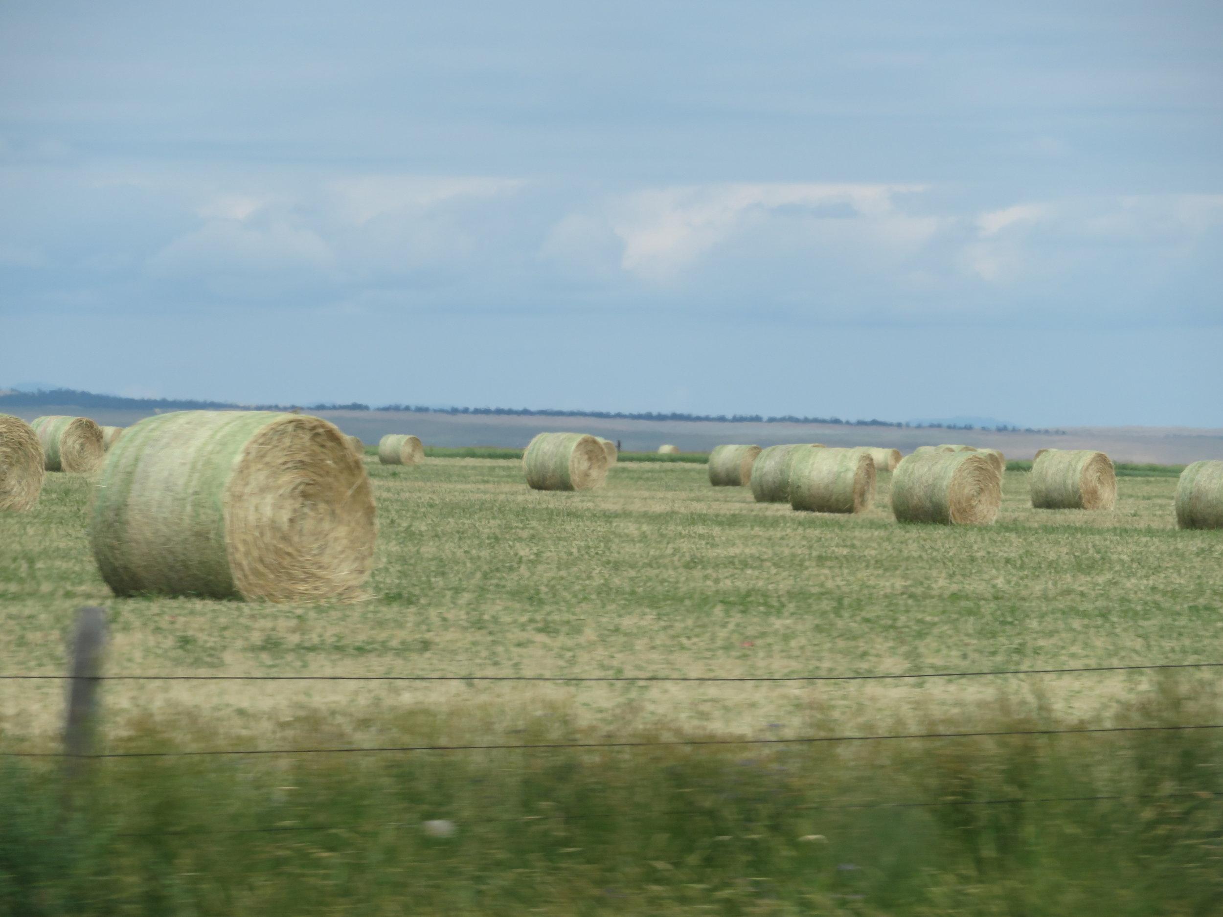 Lots of hay in Montana