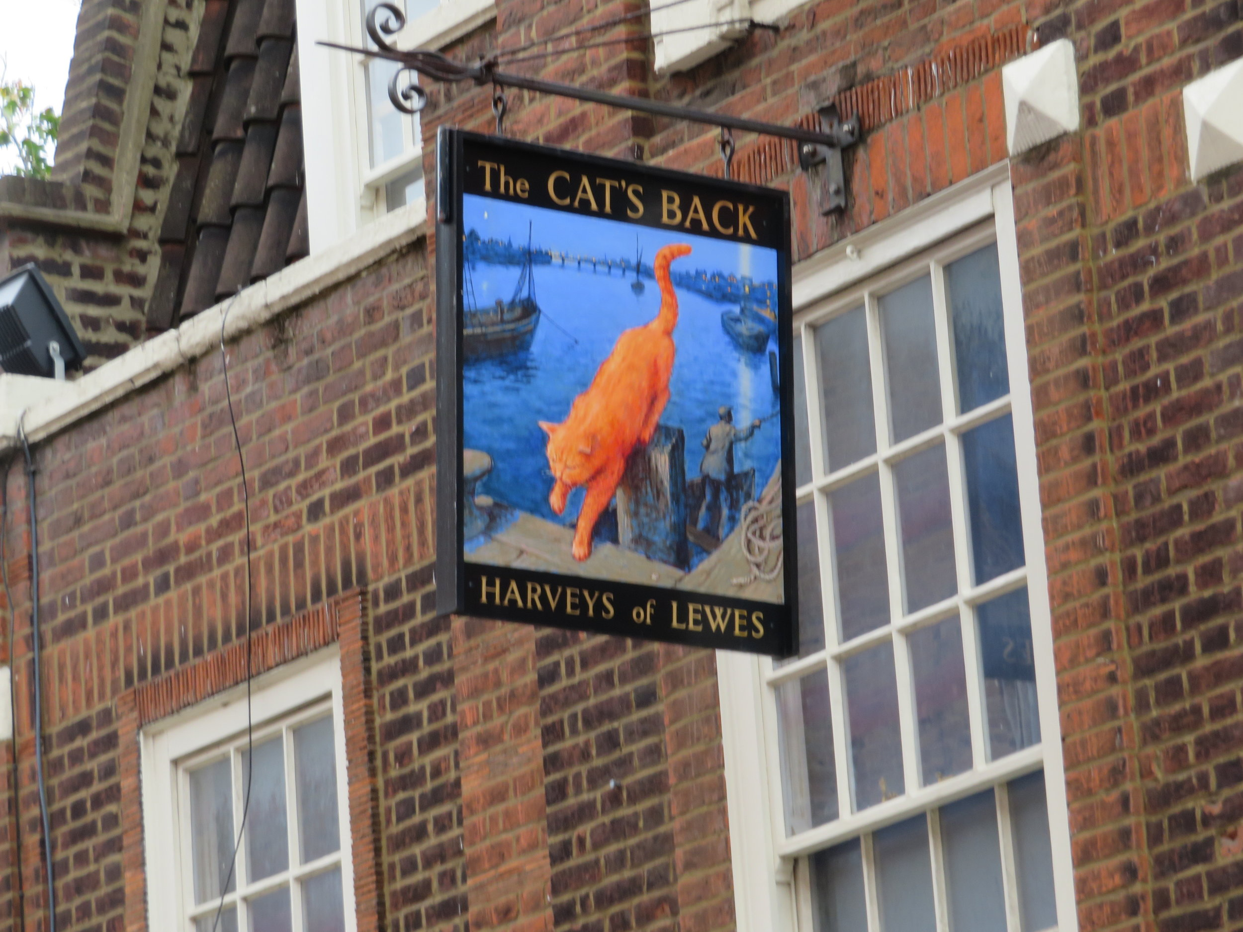 cats back pub.JPG
