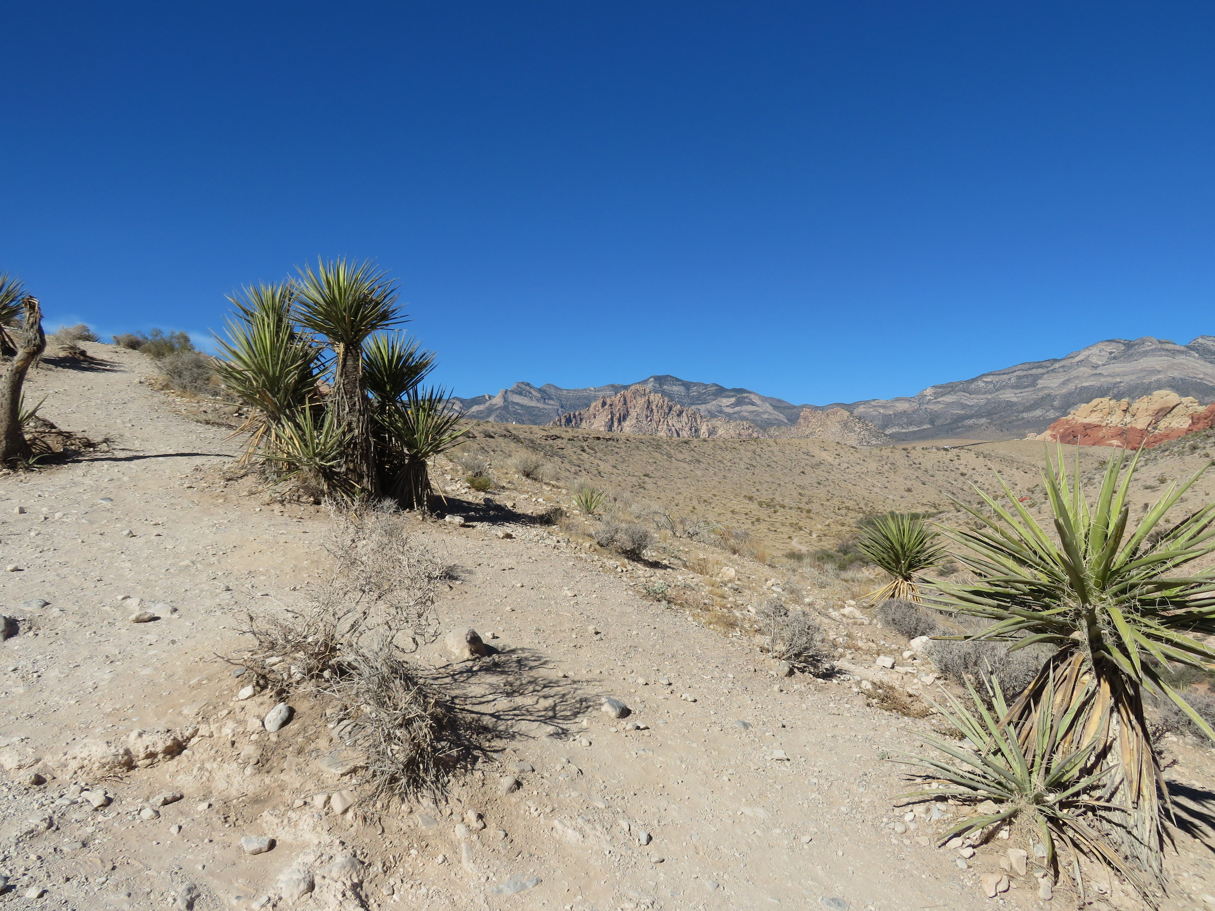 Yucca certainly dominates the views here.