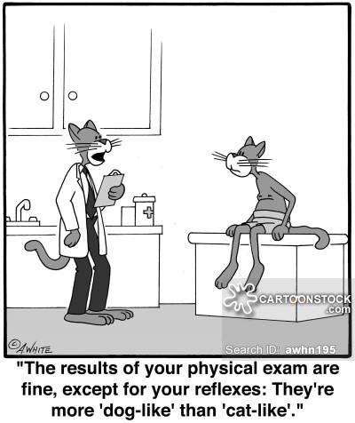 animals-cat-dog-cat_like-reflex-medical_exam-awhn195_low.jpg
