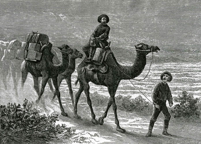 Beale's Camel Corps