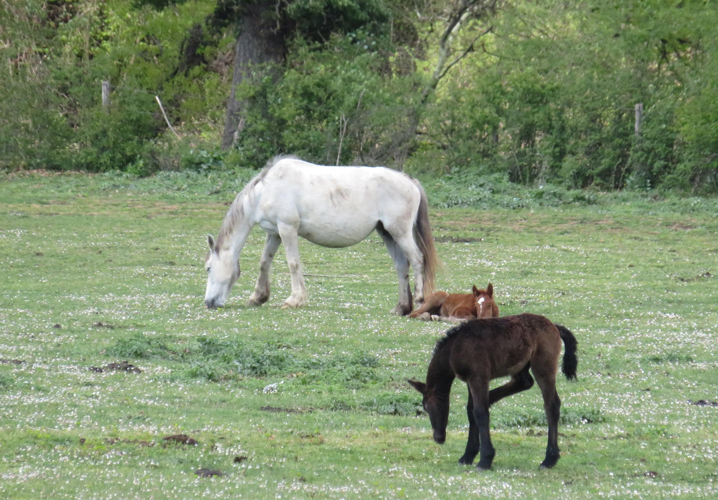 Spring foals