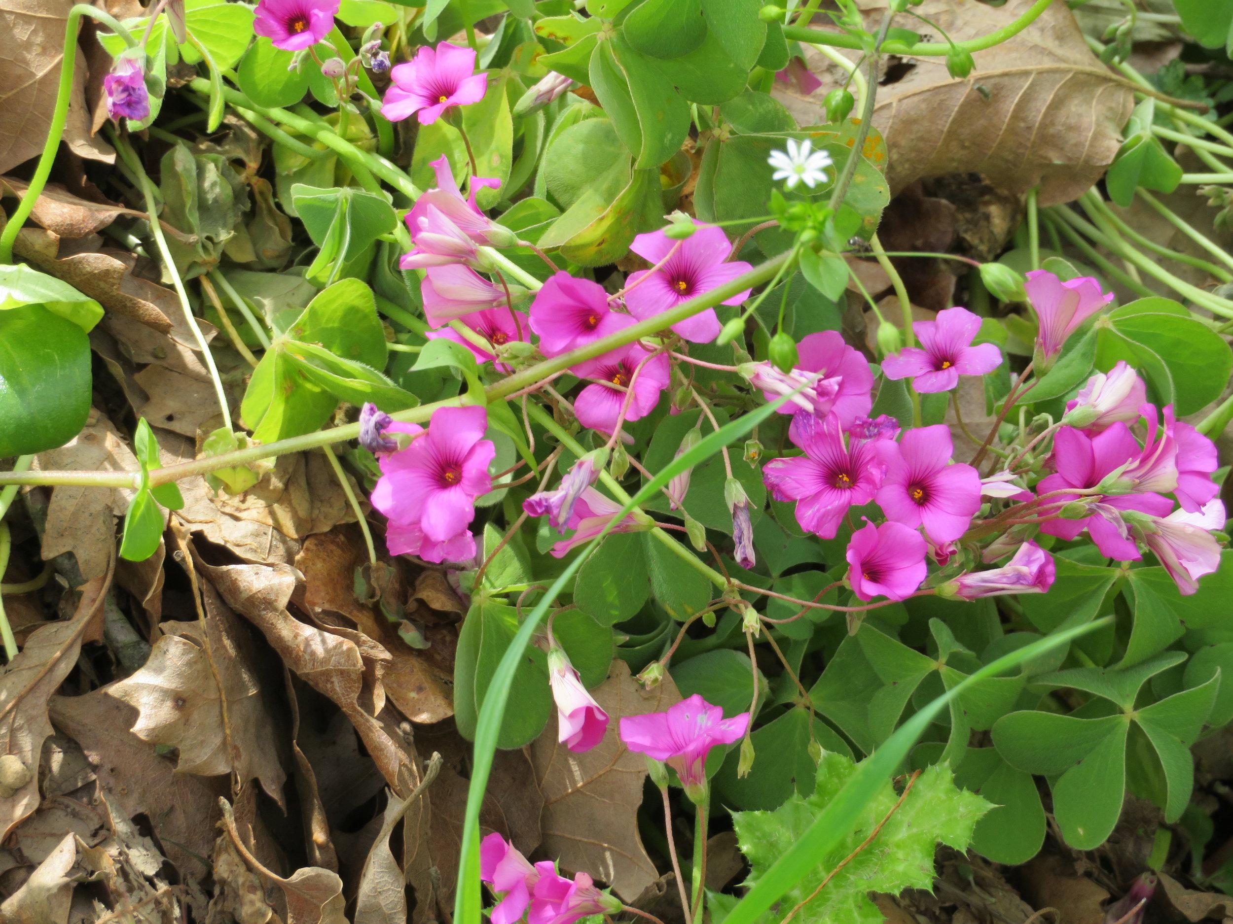 flower13.JPG