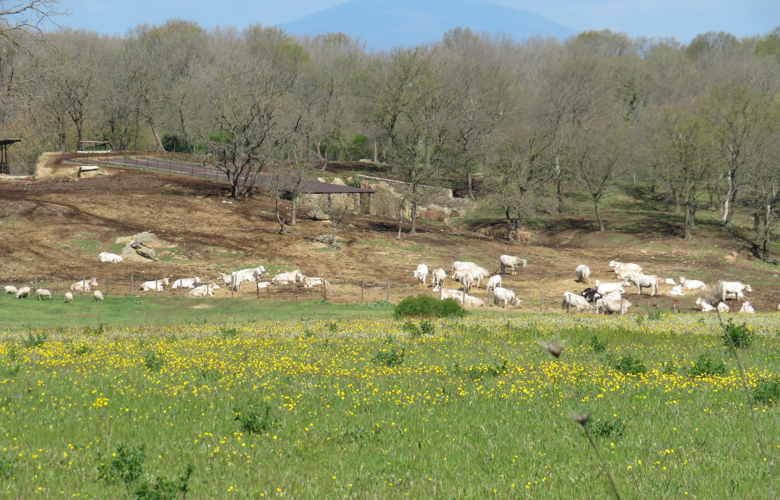 VF-Day3-pastoral scene.JPG
