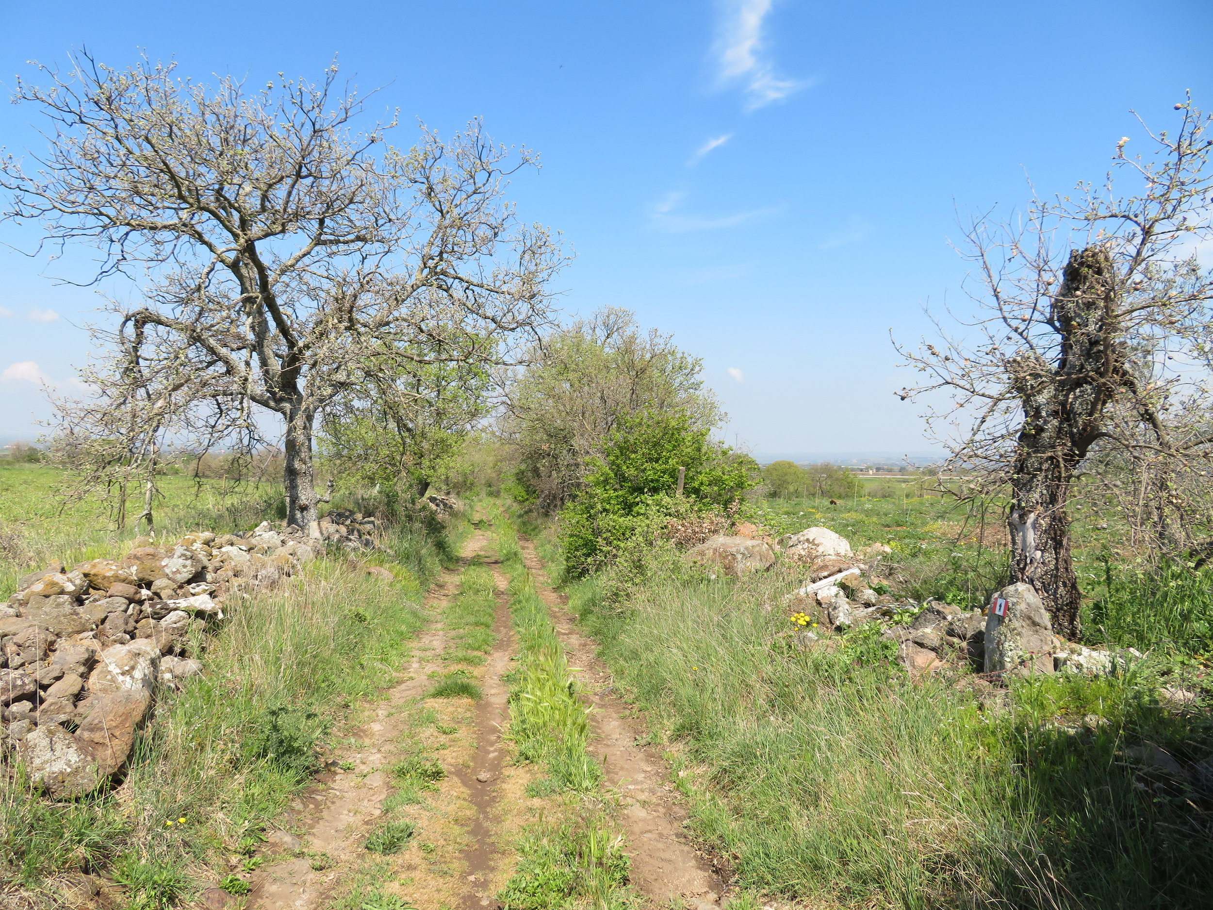Old, rutted cart roads lined with stone walls are often part of the VF path.