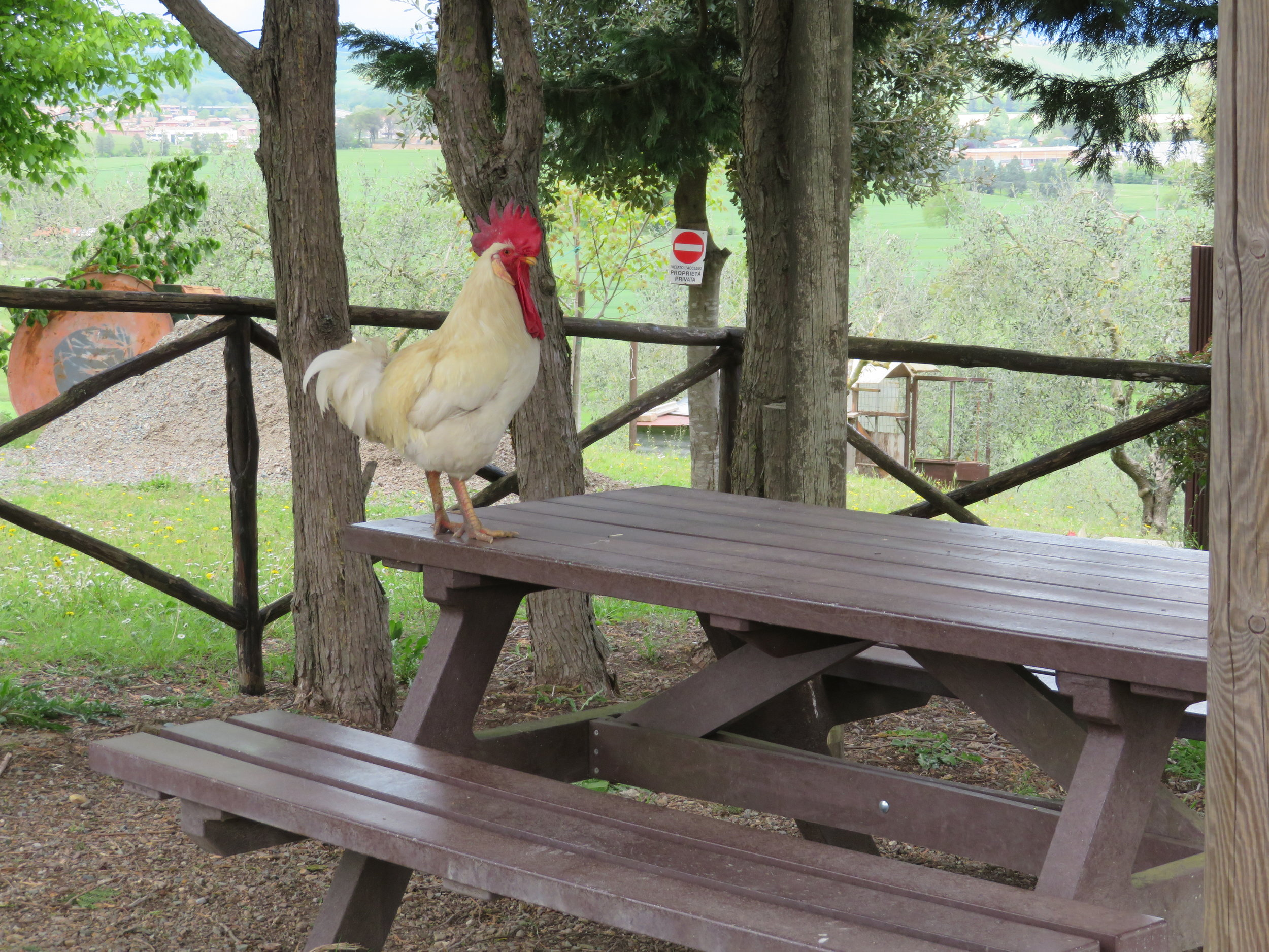We shared the rest stop with chickens …