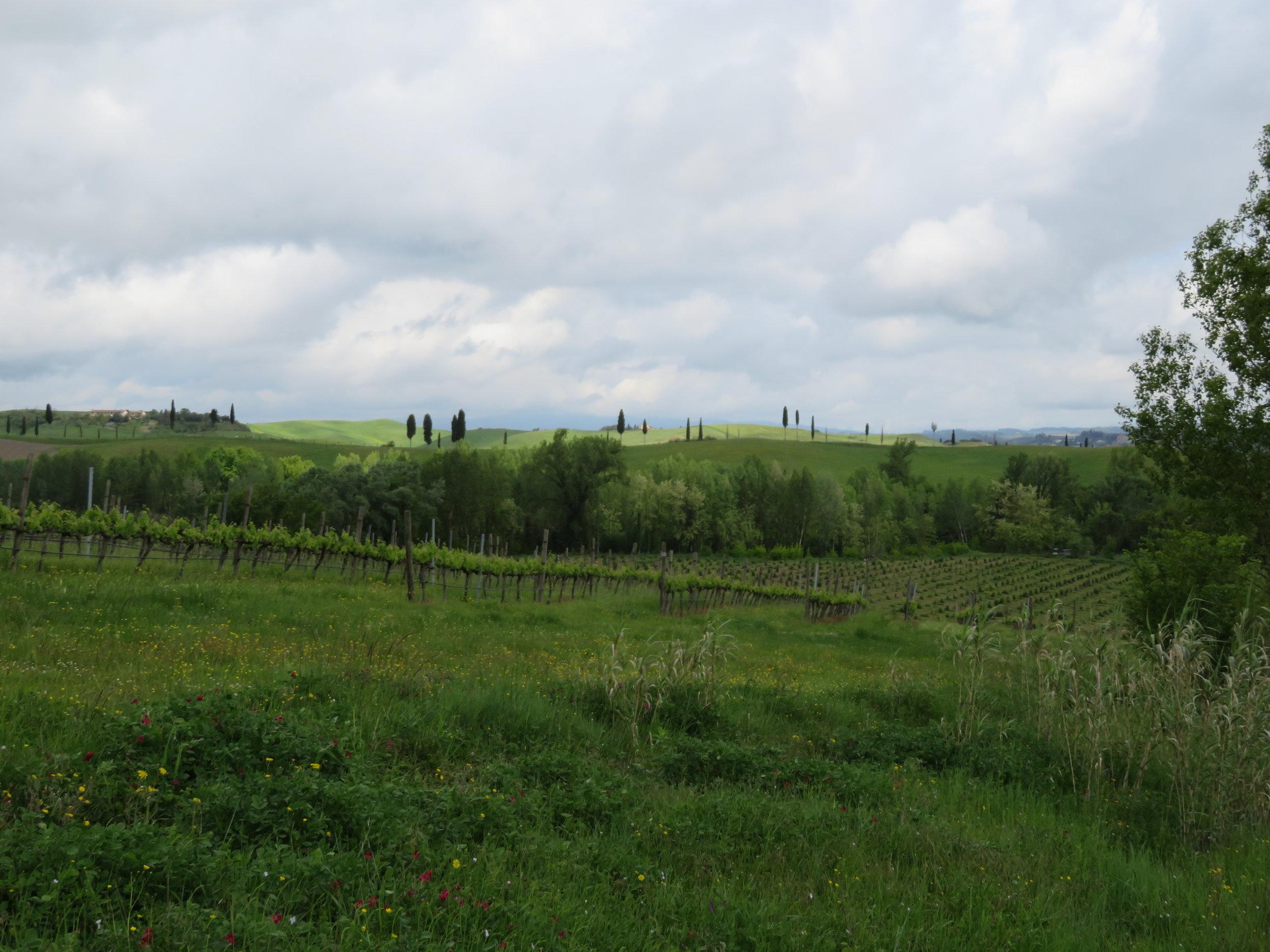Sometimes vineyards ...