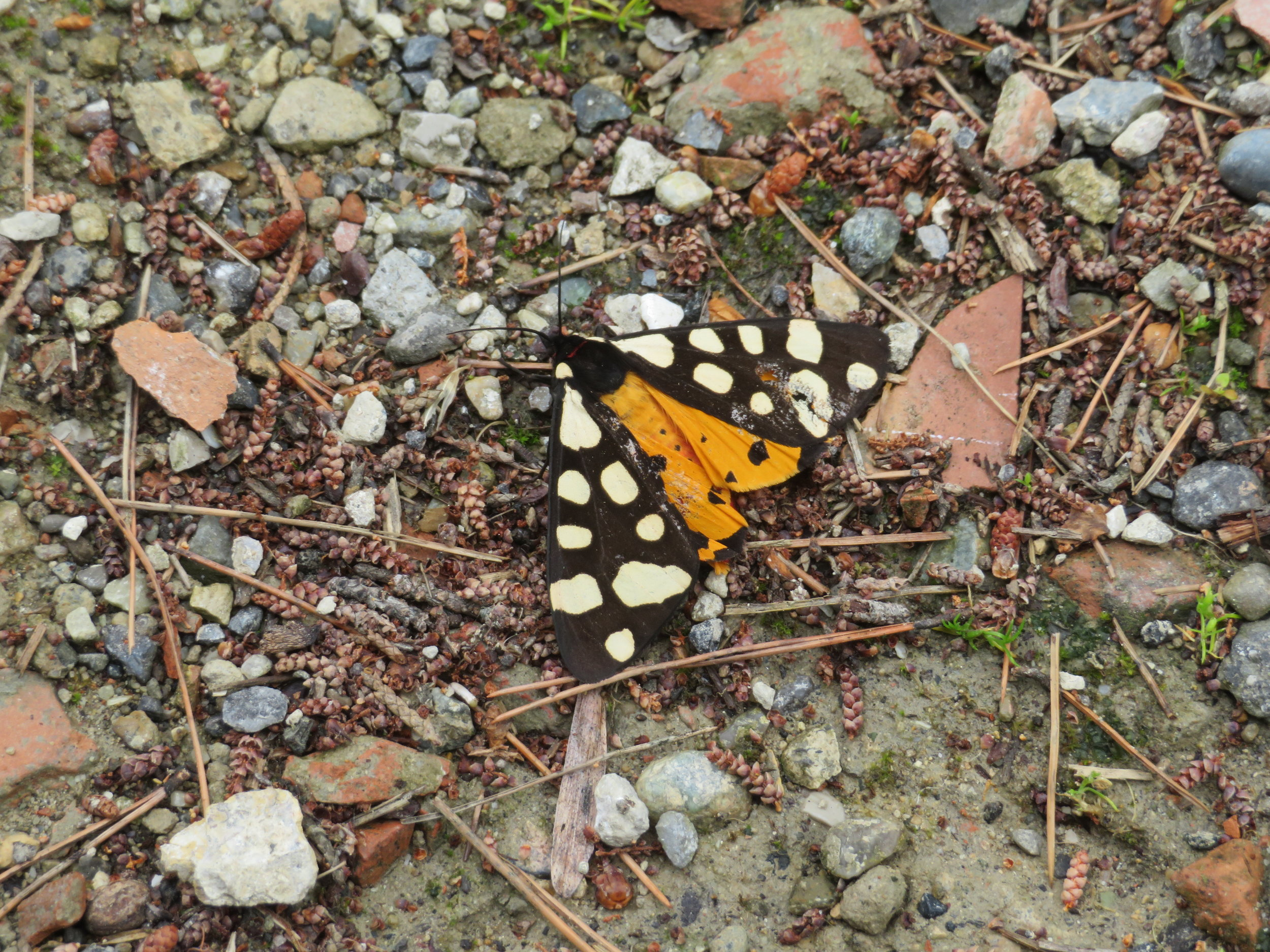 A butterfly fluttered by and brightened up the day.
