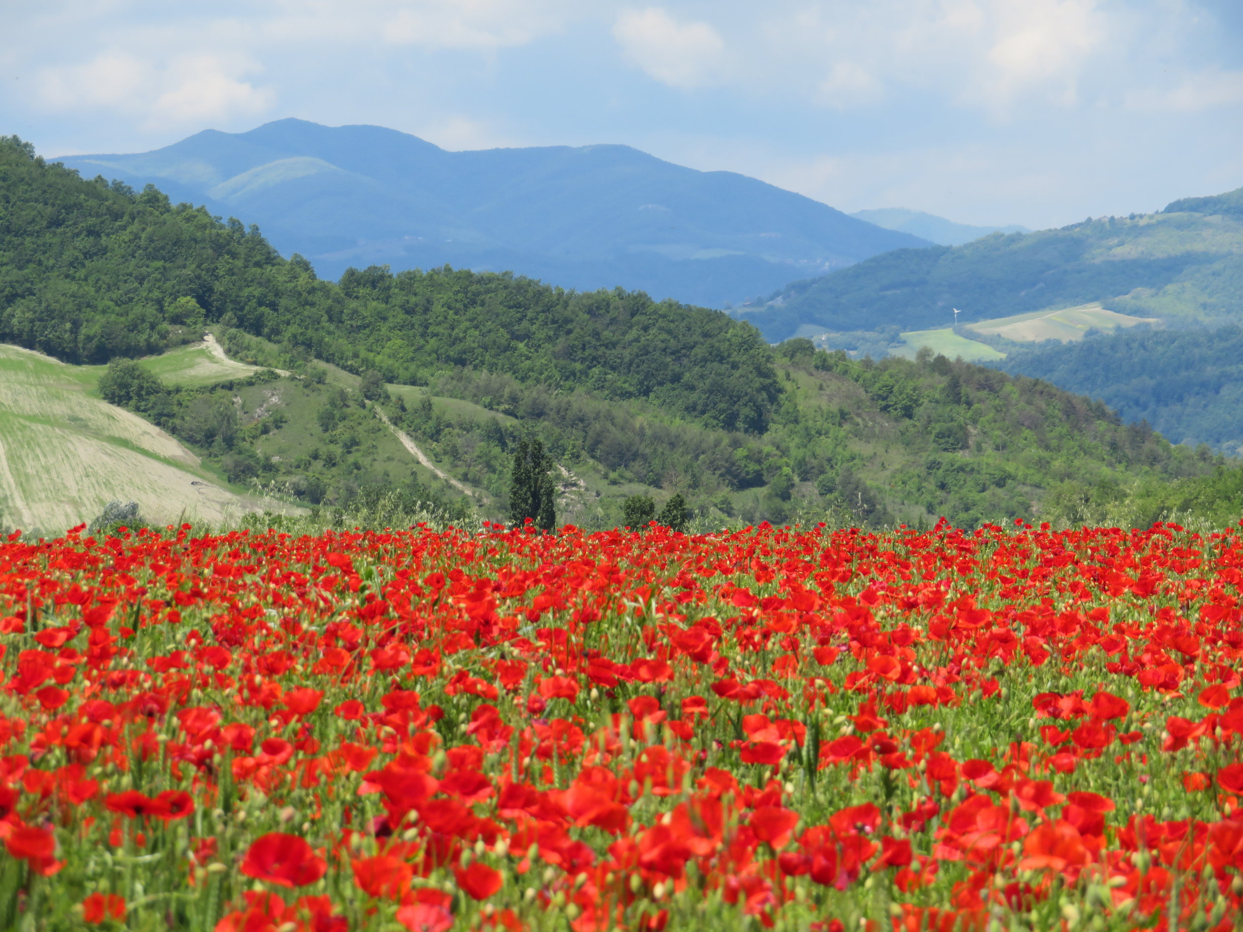 The vistas were superb … fields and fields of poppies.