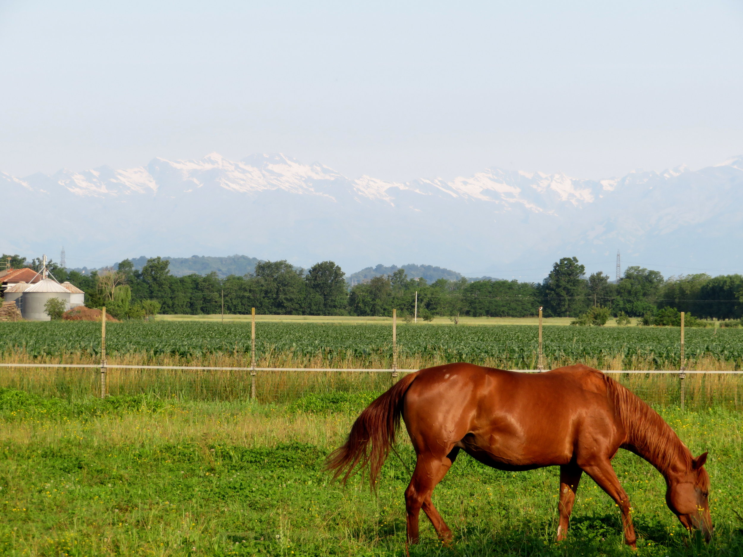 Our first glimpse of the snow-covered Alps in the far distance