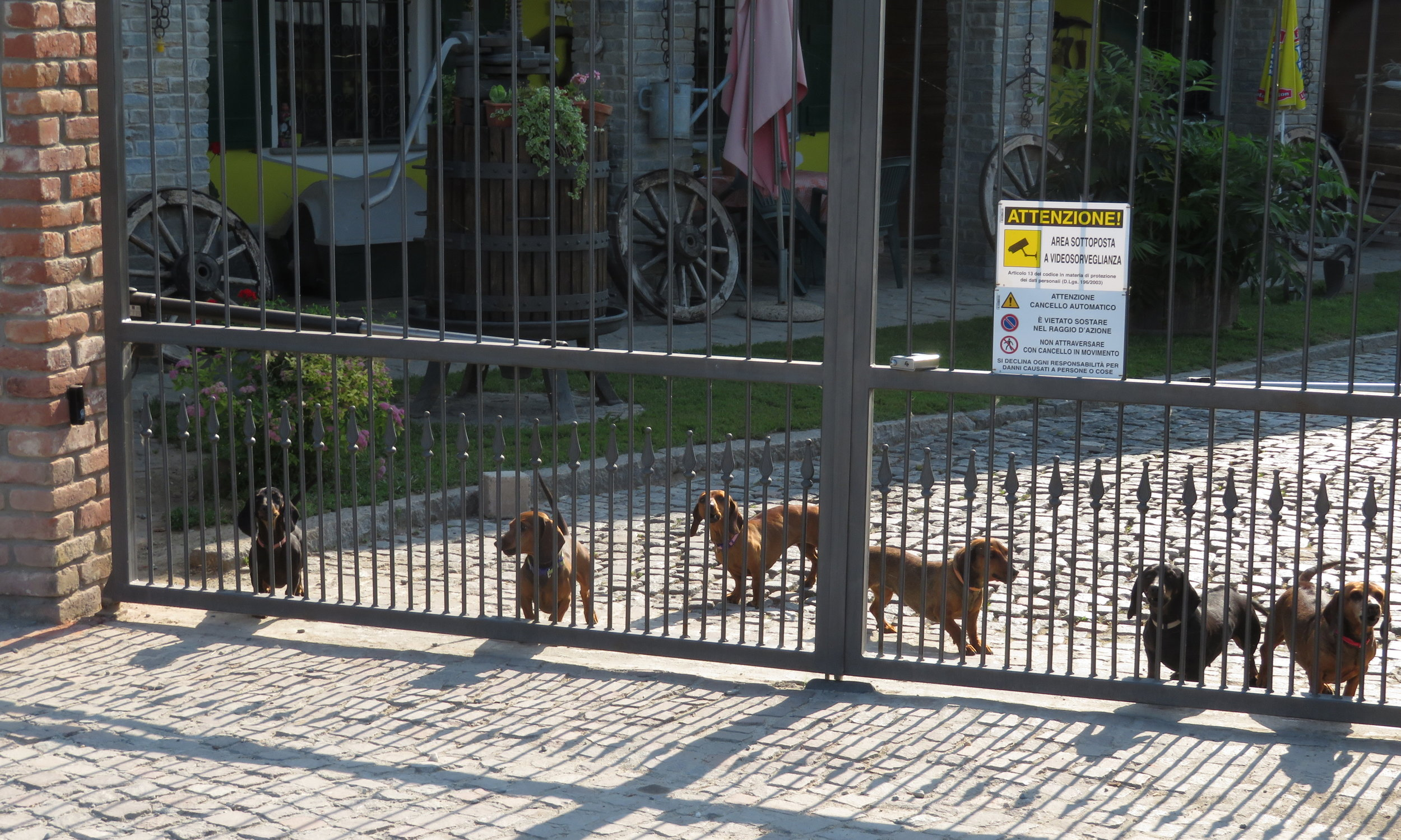 Beware of the dogs! We counted at least a dozen dachsunds yipping, growling and barking at us as we passed. It was hard to take them seriously, but of course, we were on the other side of the fence.