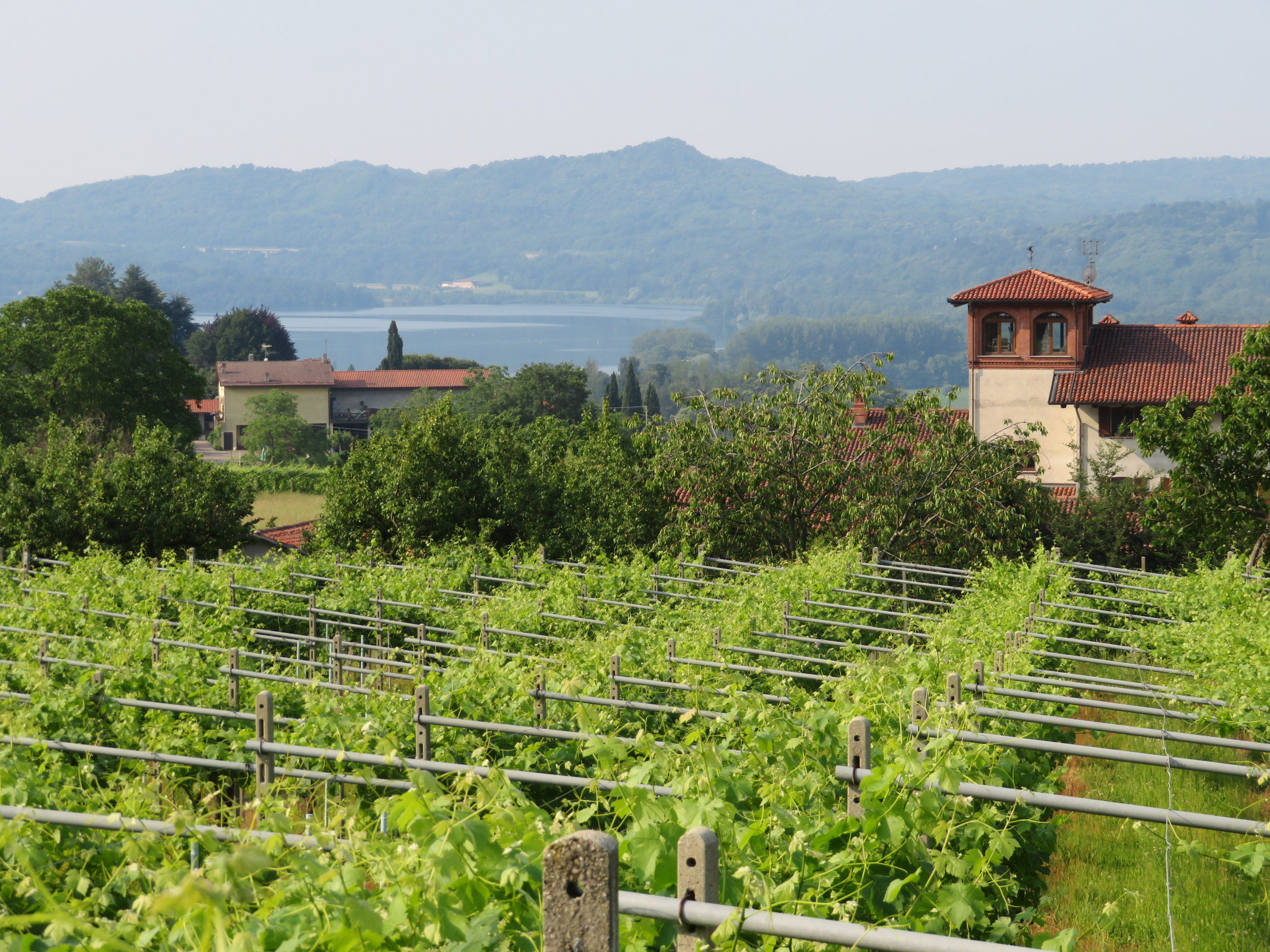 The climate of the Piedmont region in the foothills of the Alps provide a perfect area for vineyards.
