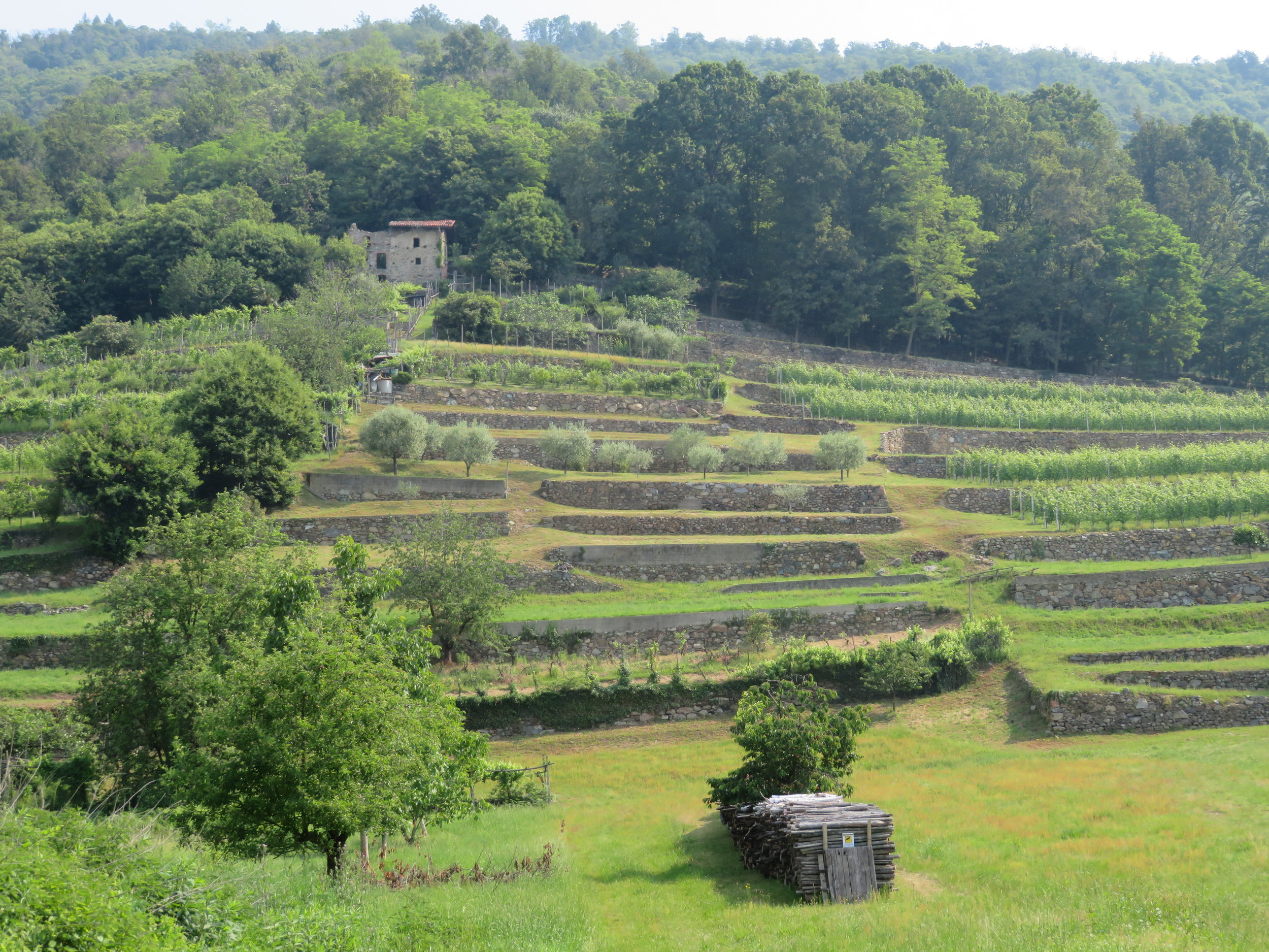 Terracing takes advantage of every bit of arable land in this hilly region.