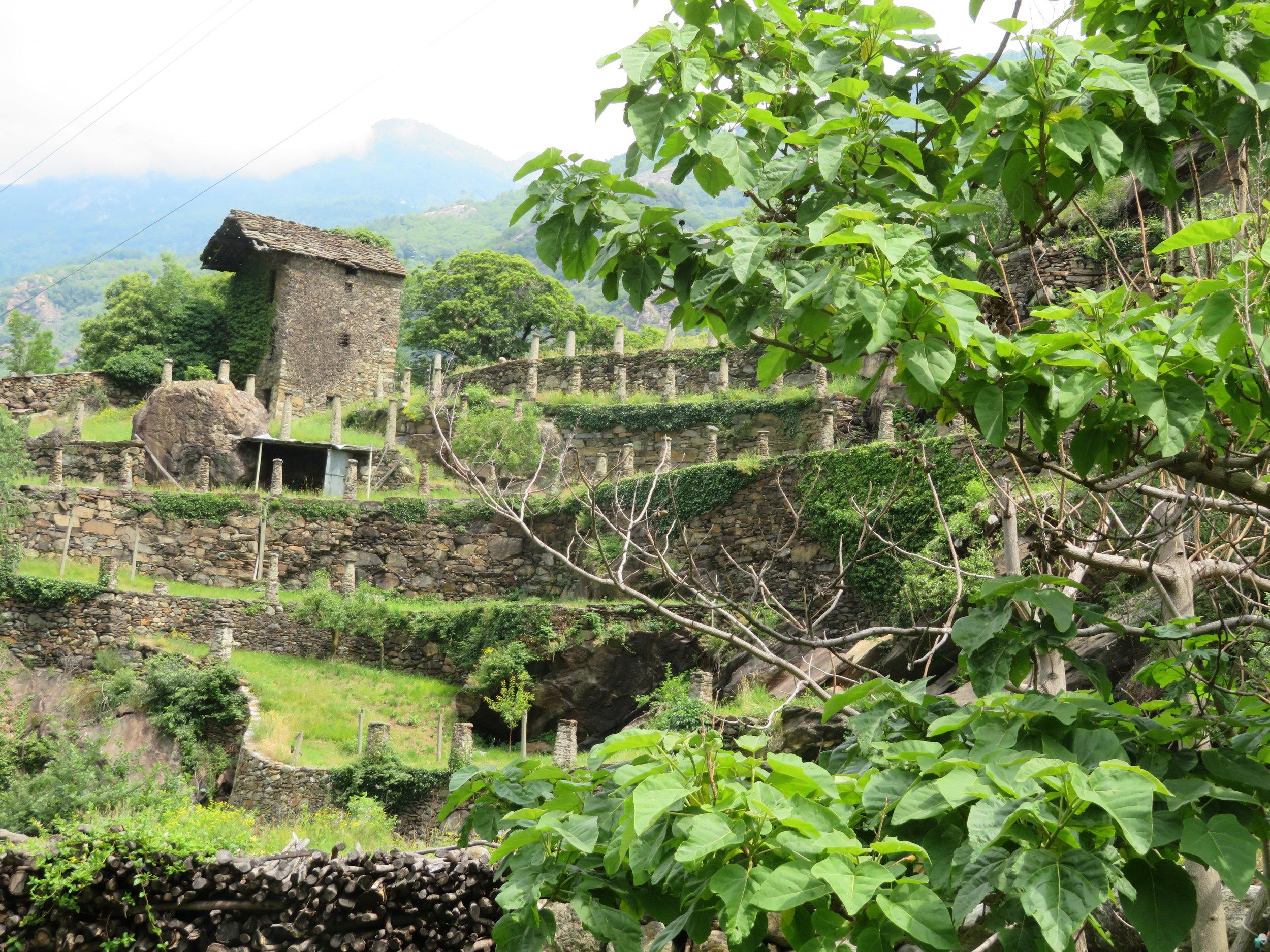 Beautiful terraced vineyards