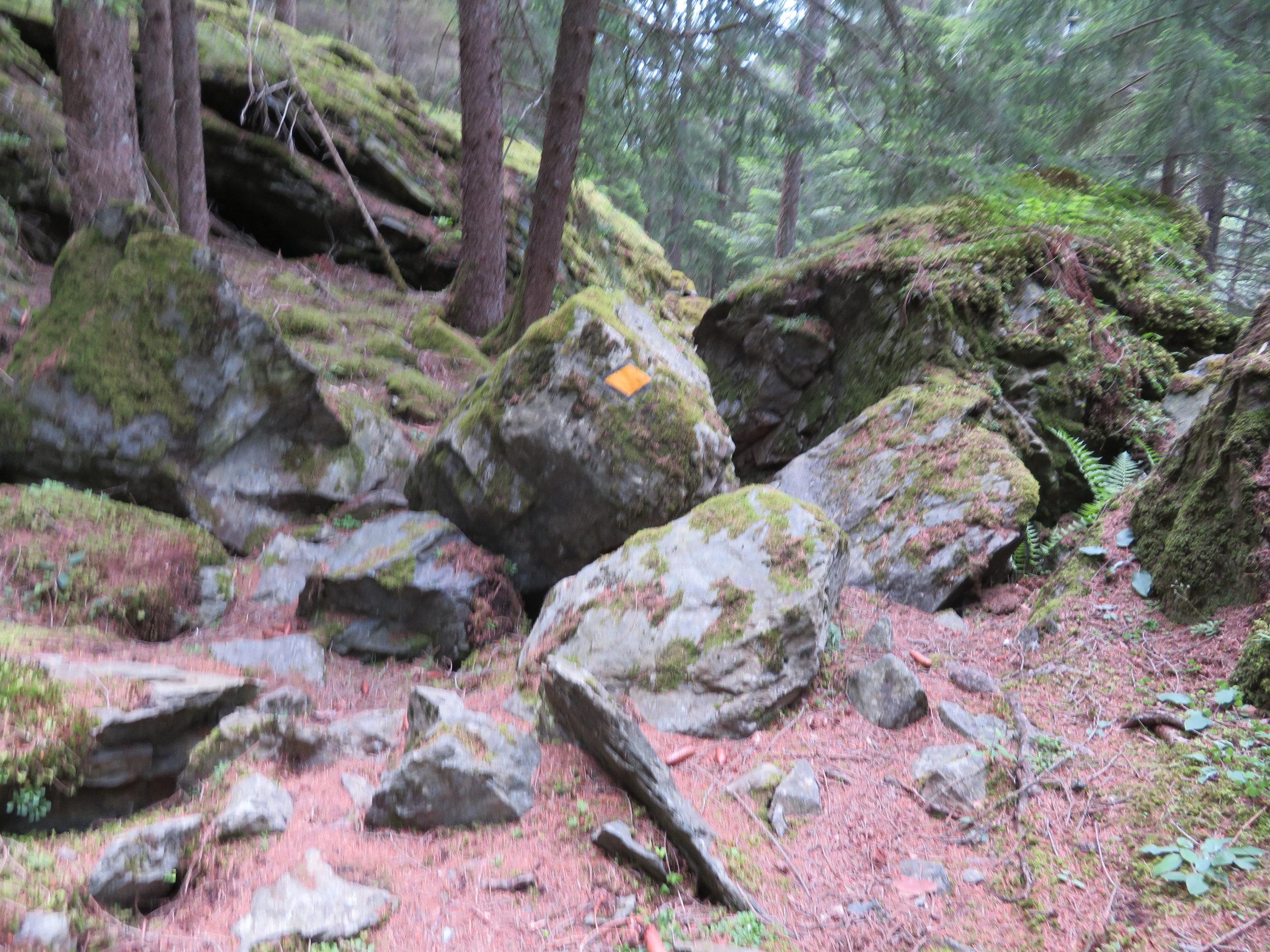 Huge boulders, ruts, roots and uenven terrain kept the walk very, very interesting.