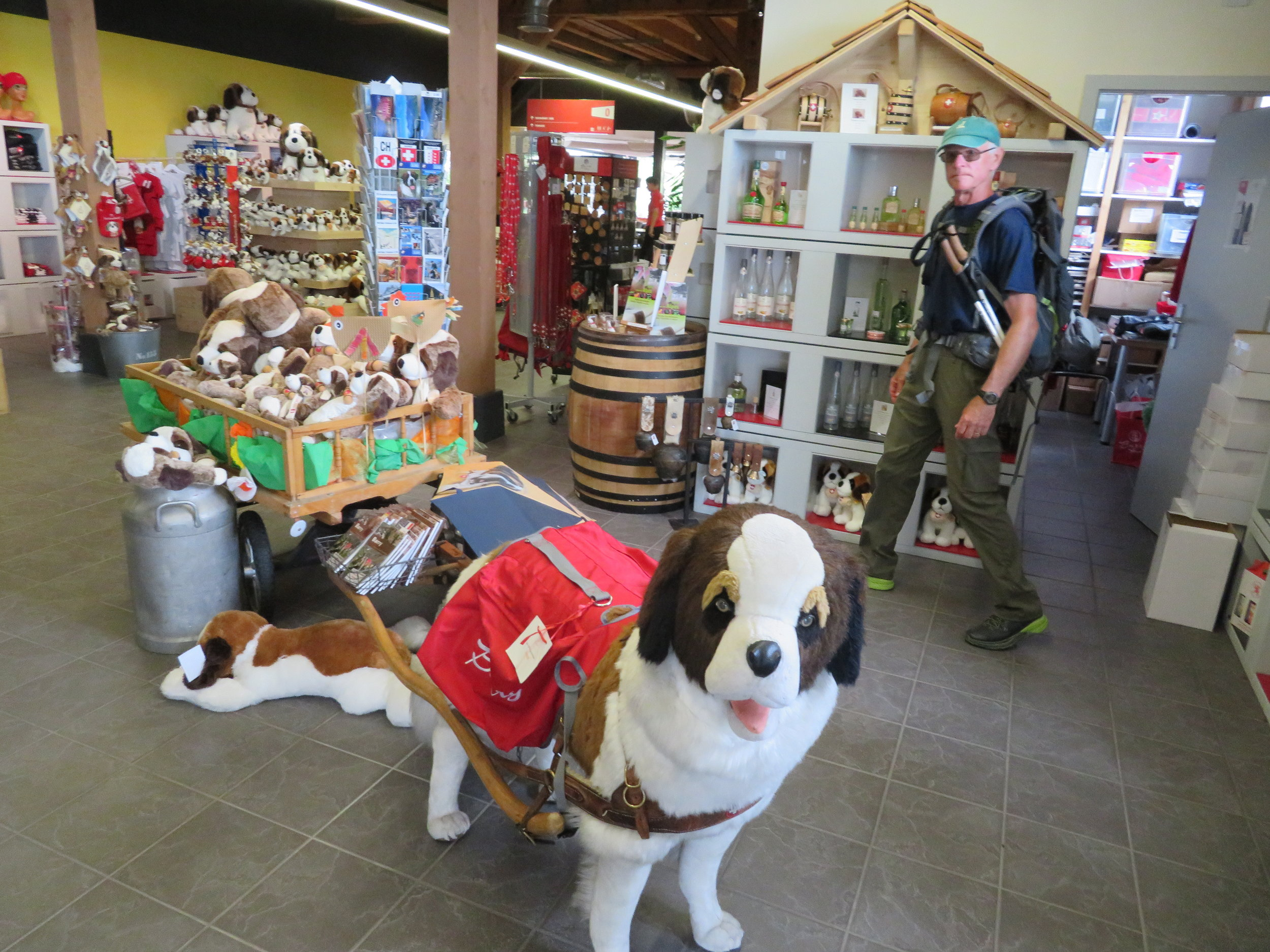 All things St. Bernard