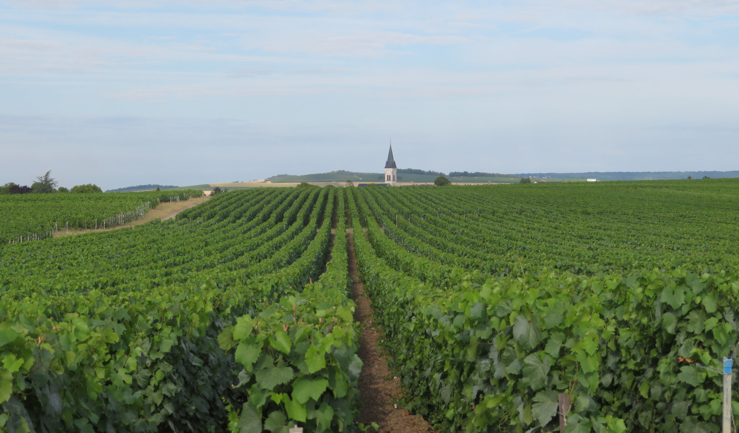 ambonnay-Rilly_champagne vineyards.JPG