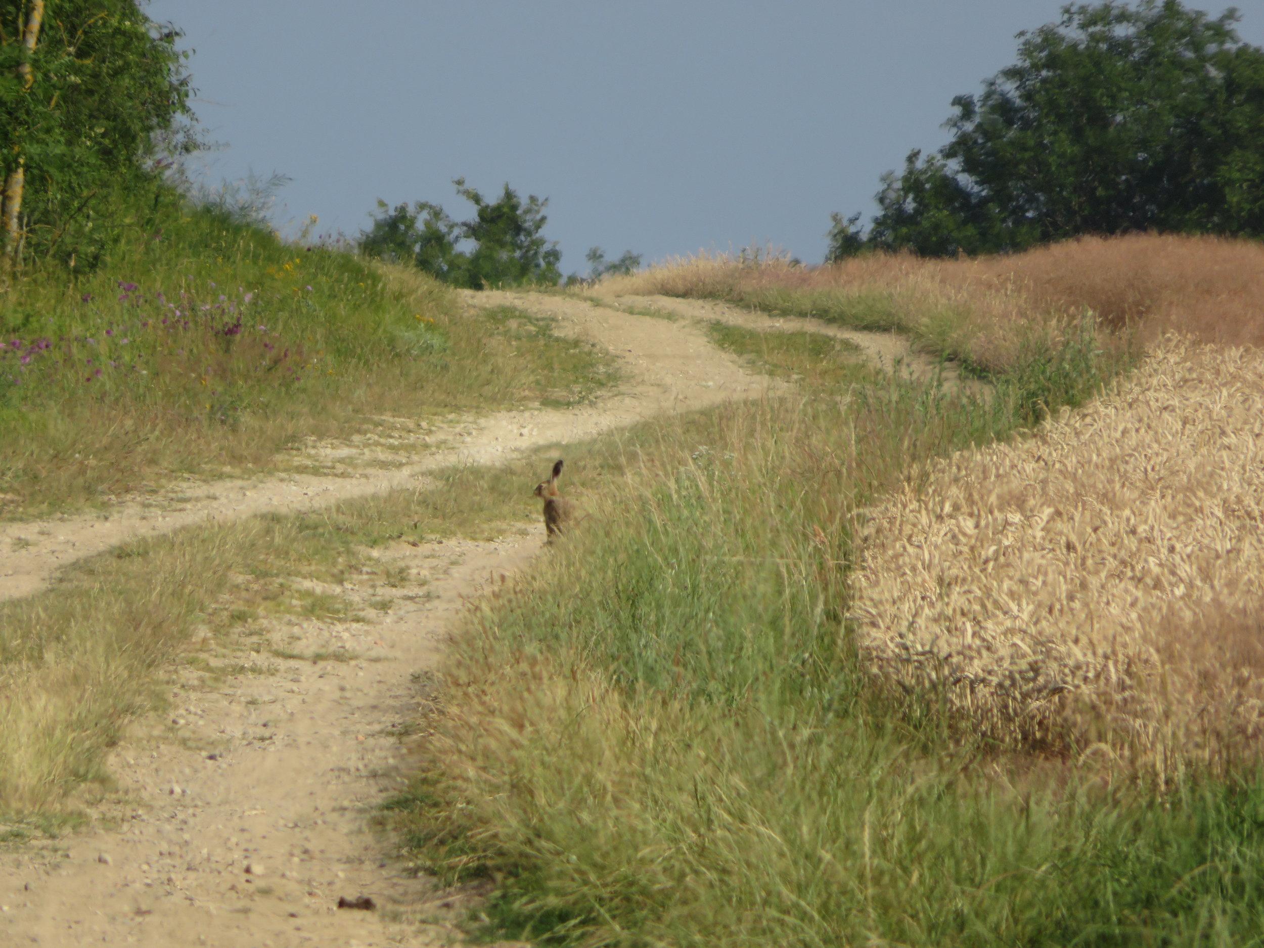 Farm roads and ...