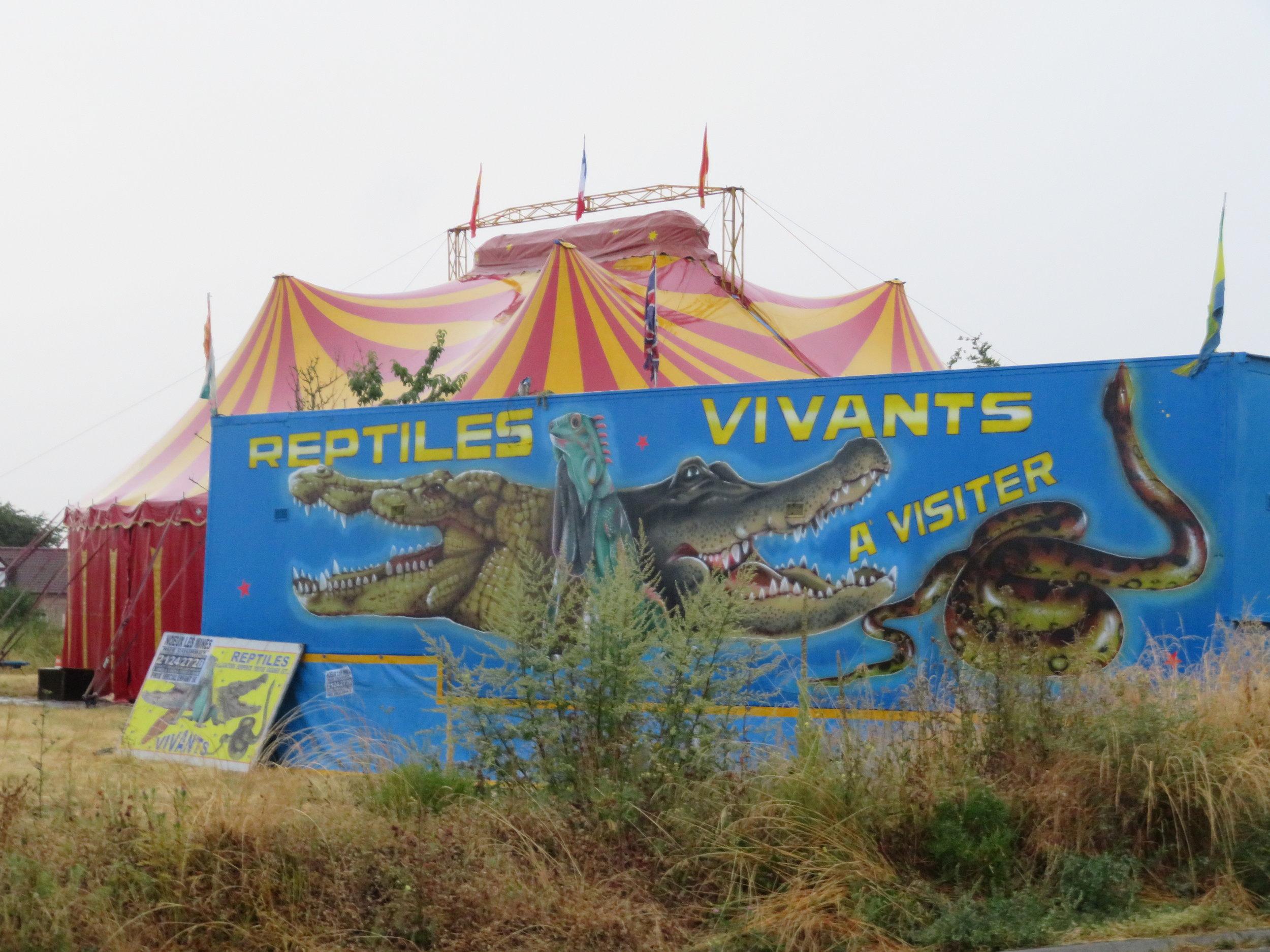 snakes & tortoises...
