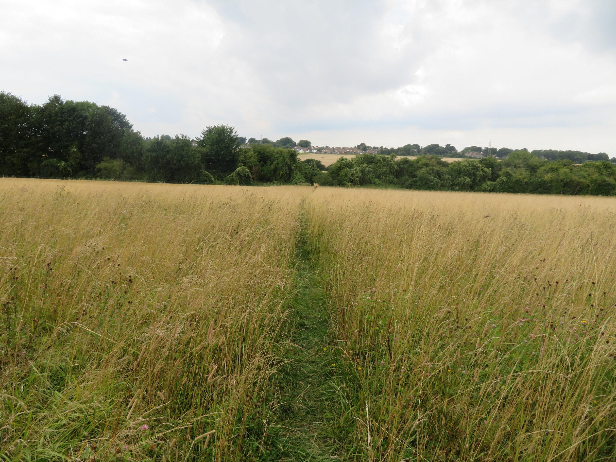 thru tall grass...