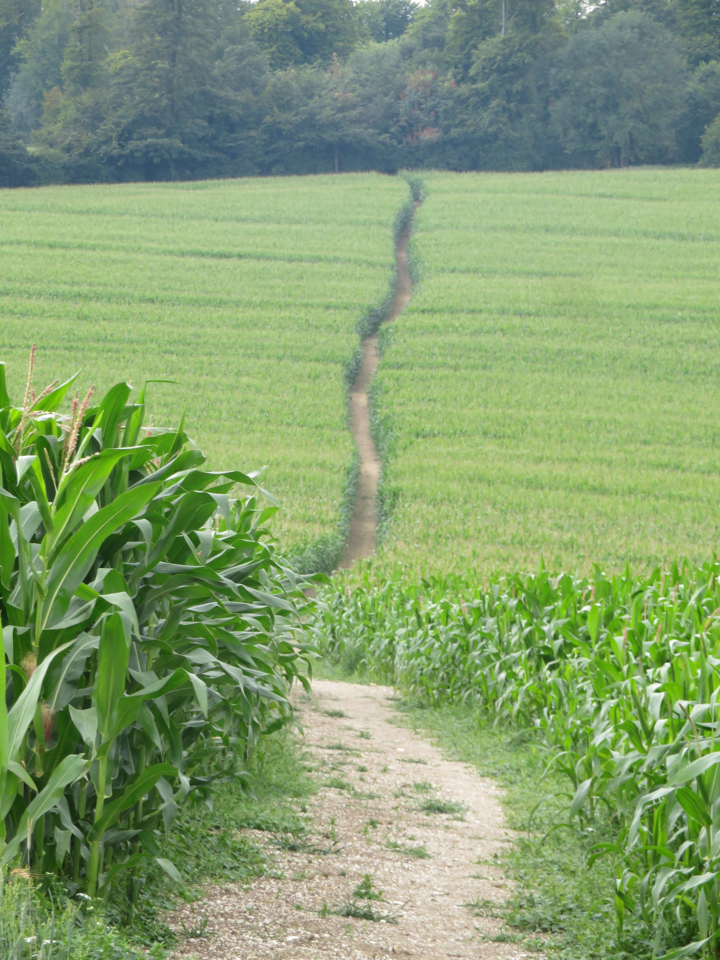 Thru cornfields & hayfields