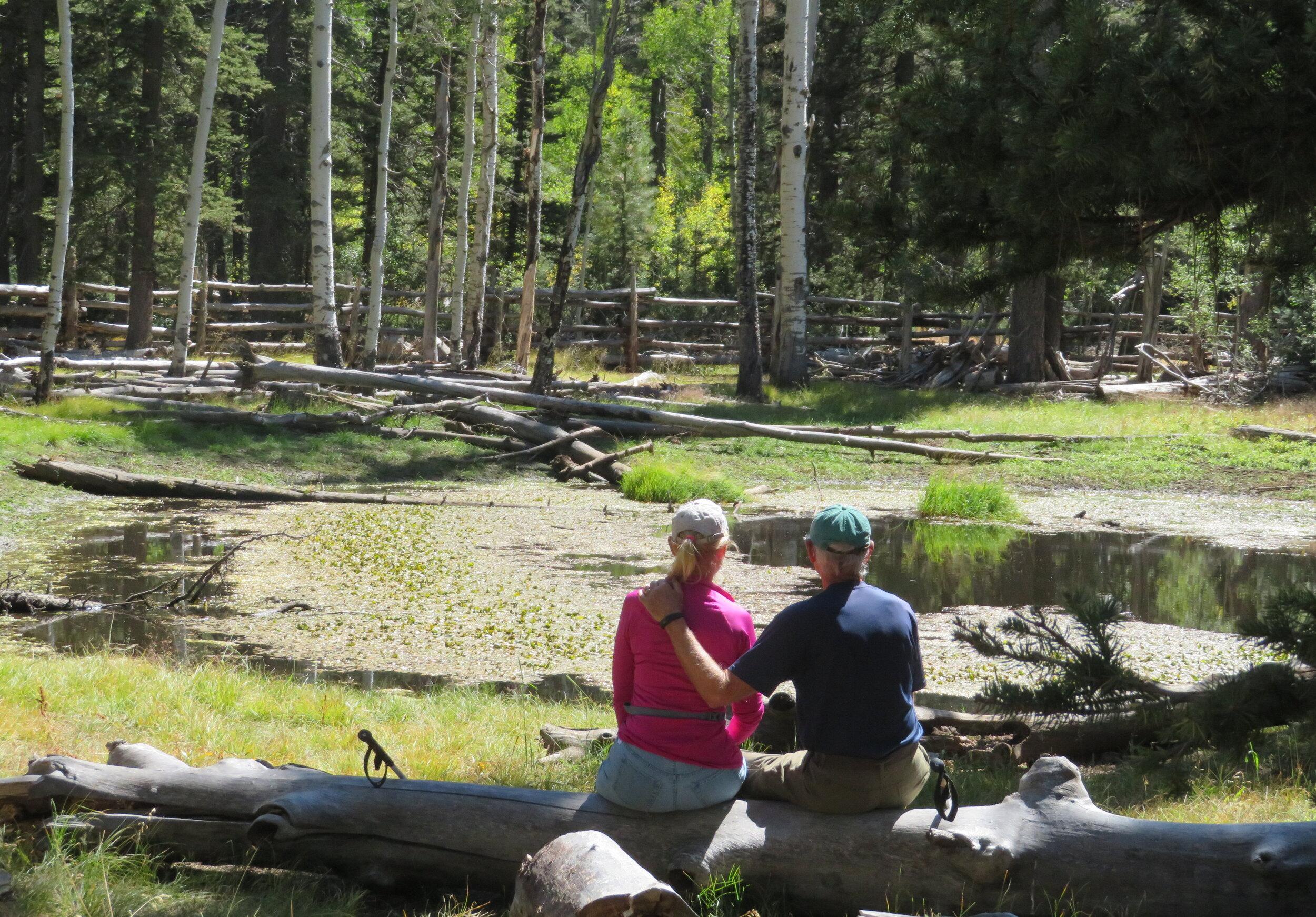 A short break at Dog Pond