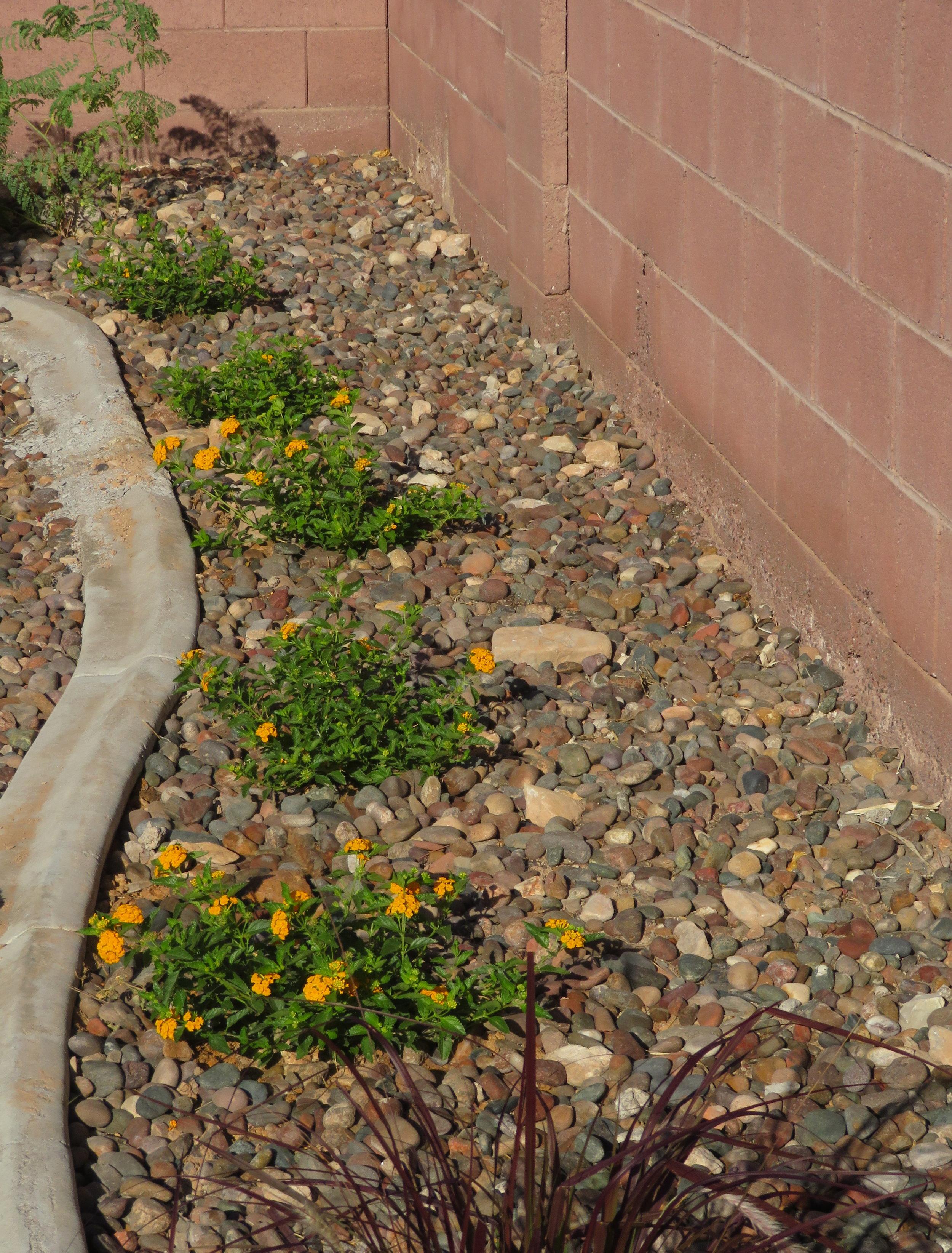 New backyard landscaping