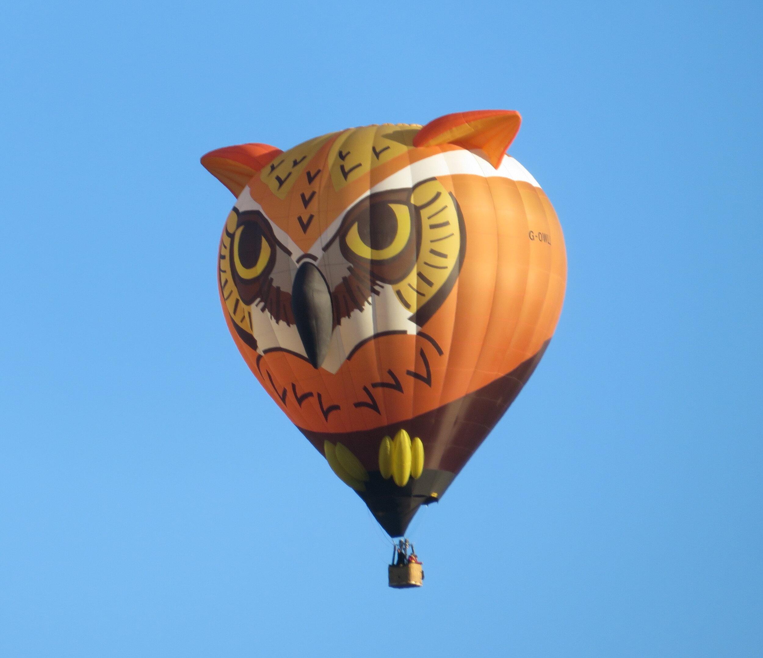 Owl-buquerque