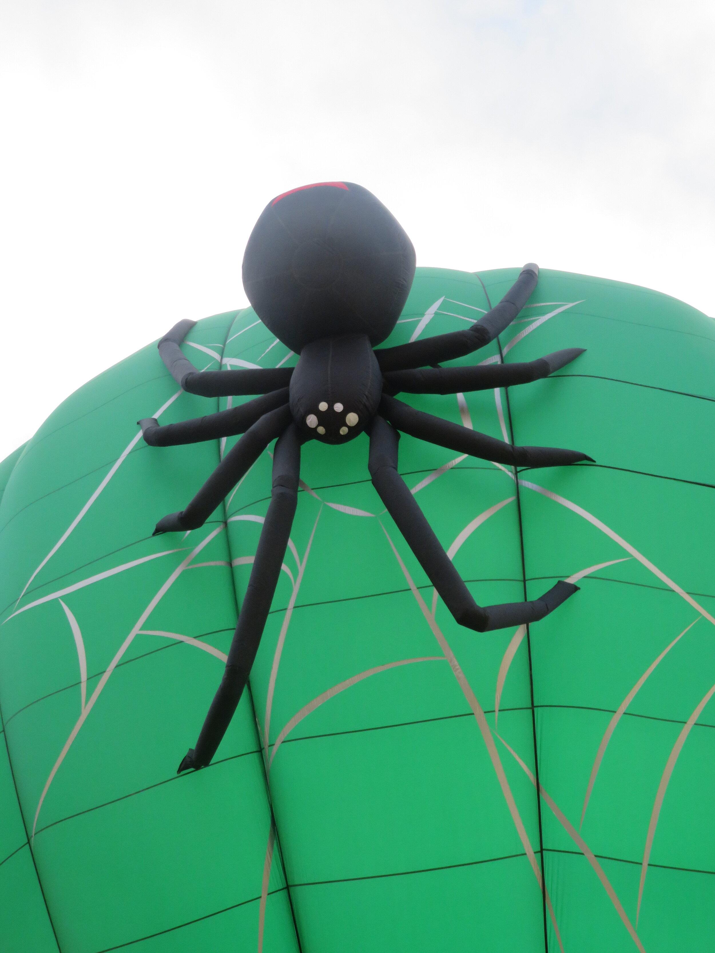 Pest Control Black Widow