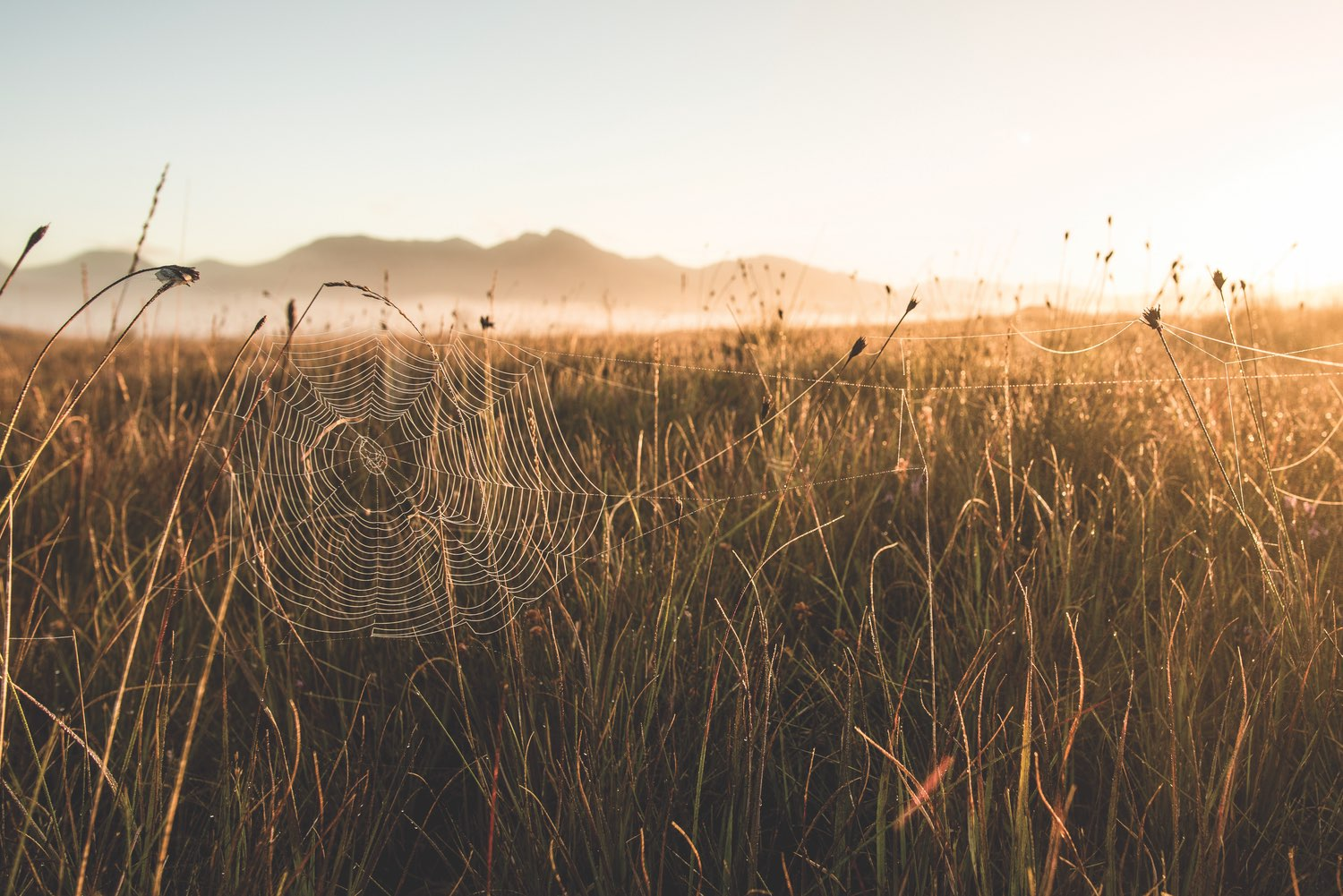 A golden sun rises over Roundstone Bog. Photo by Mark Furniss