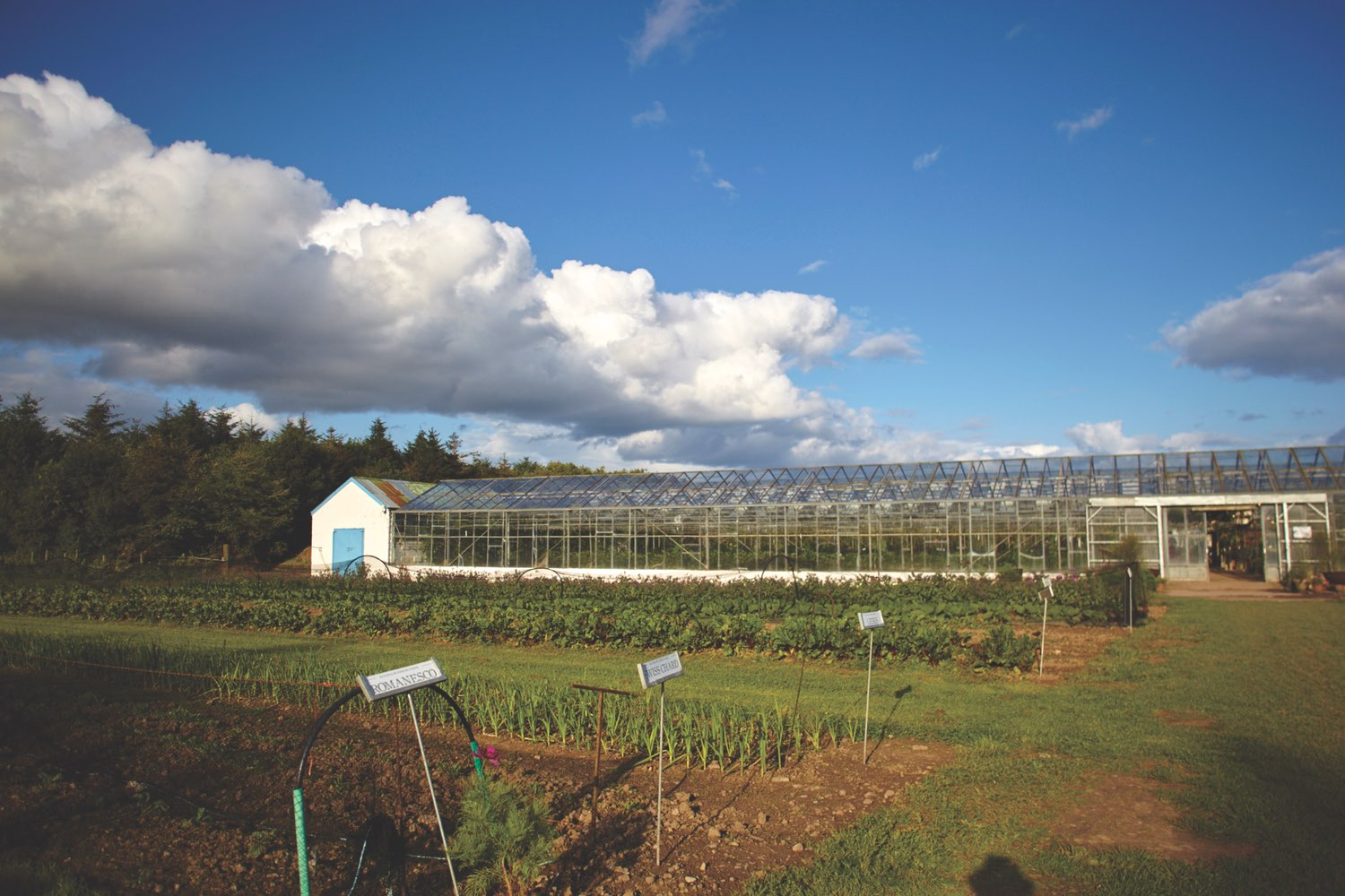 One of the greenhouses that sits on Ballymaloe Cookery School property