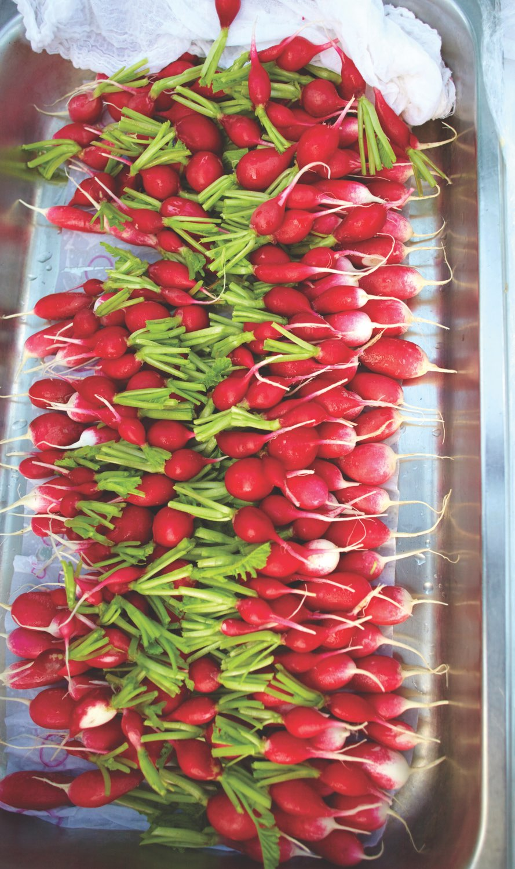 Fresh radishes lined up on sheet at Ballymaloe Cookery School