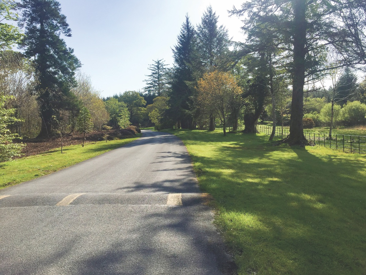 A section of the avenue, once choked by rhododendrons. (Photo courtesy of Ballynahinch Castle Hotel & Estate)