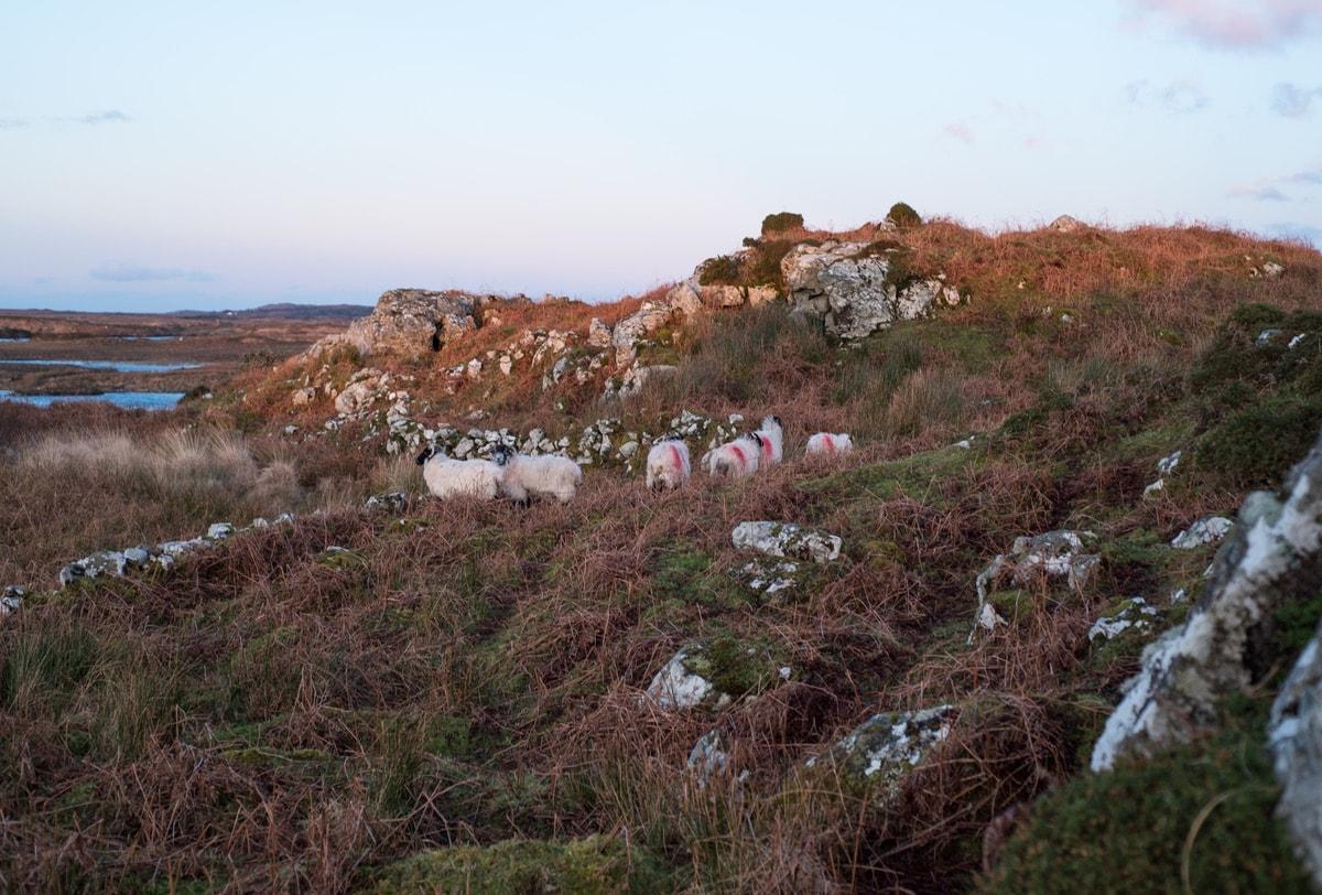 Connemara-Life-2018-Cliodhna-Prendergast-Lamb-Recipe-1-min.jpg
