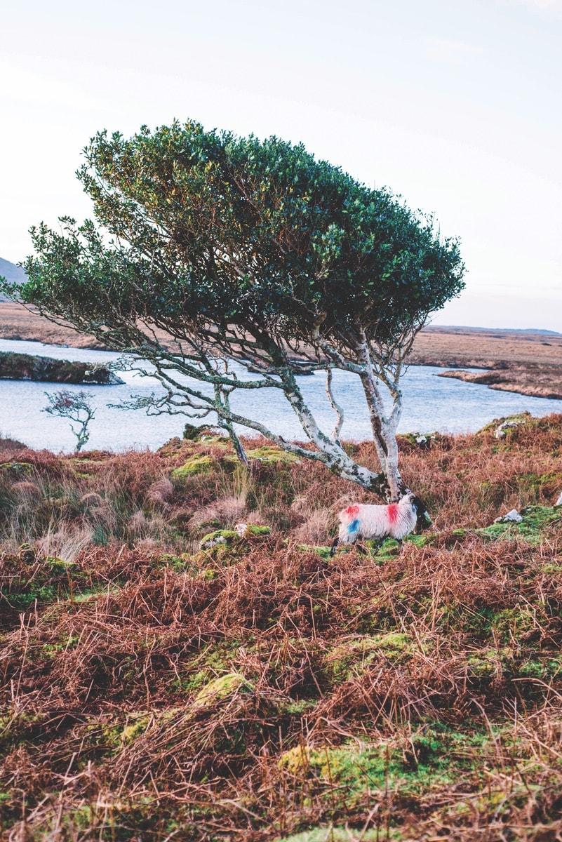 Connemara-Life-2018-Cliodhna-Prendergast-Lamb-Recipe-2-min.jpg