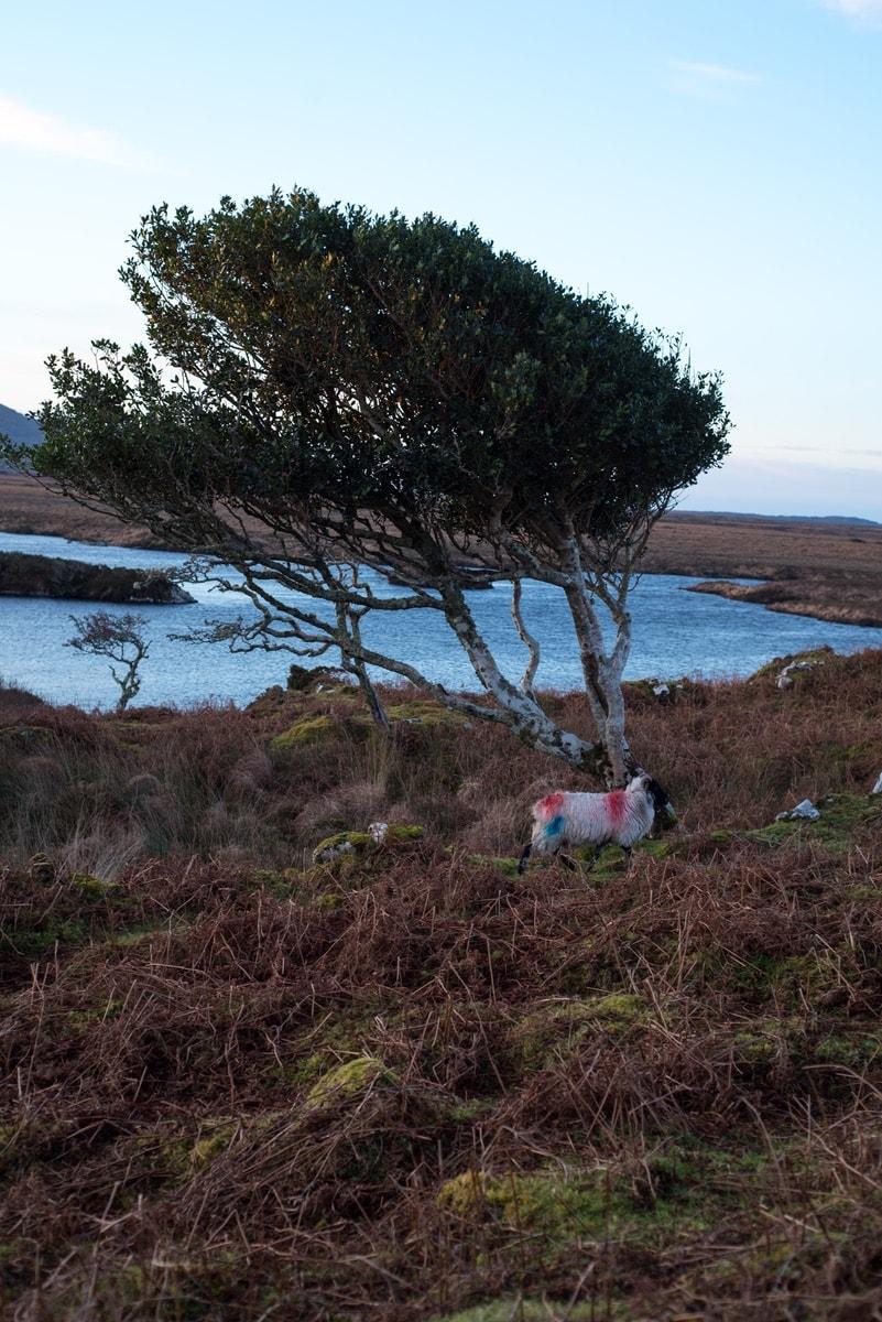 Connemara-Life-2018-Cliodhna-Prendergast-Lamb-Recipe-3-min.jpg