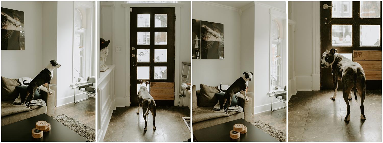 Hannah_Baldwin_Photography_Washington_DC_in_home_lifestyle_engagement_0028.jpg