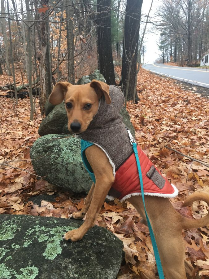 """My dog Witty is loving his walks with Alix. Love the ease of scheduling and getting a picture each time Witty goes on his adventures!"" -SAMANTHA SAWYER"