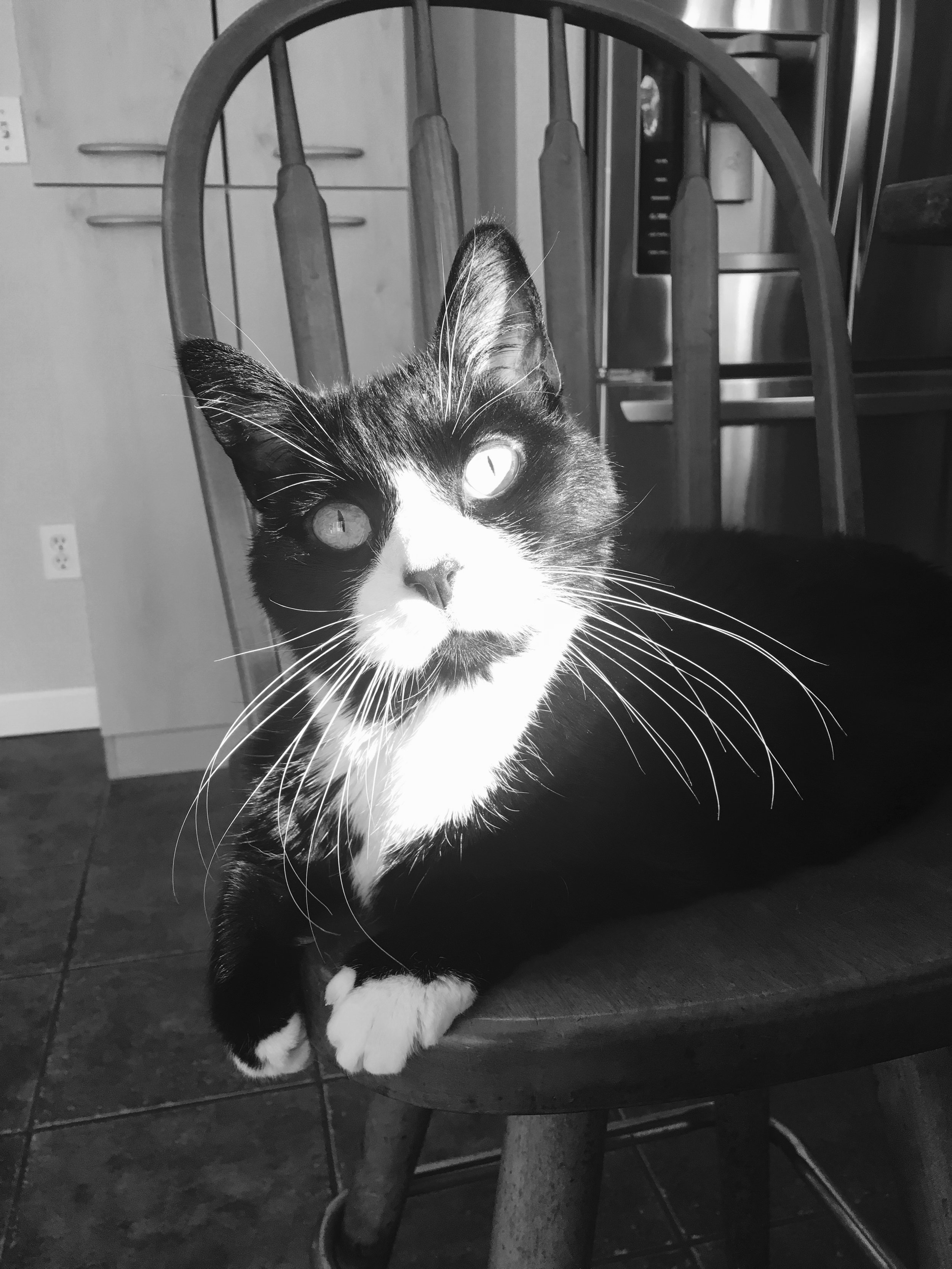 """""""This was our first time using them and extremely happy! Sox was well taken care of and received his insulin injections on time! Will definitely use them again. Thanks Alix!""""  - SUSAN SPOONER-BISHOP"""