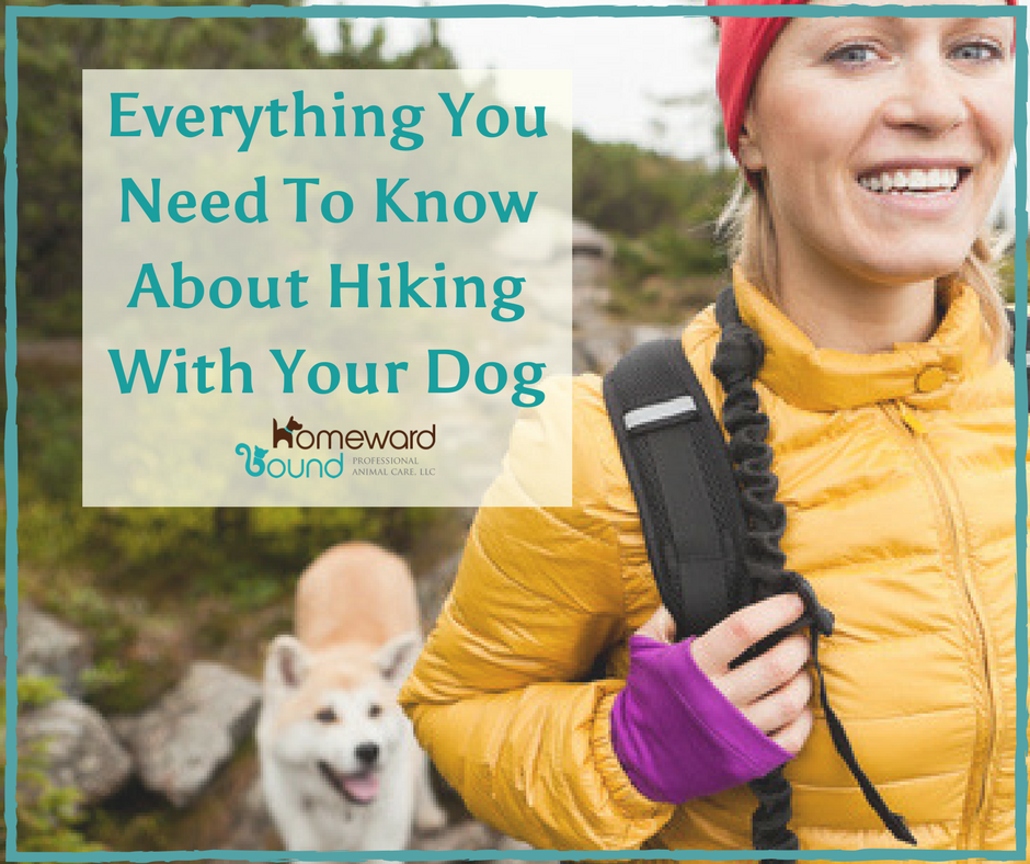 Hiking can be a fun way to spend time with your dog..if you are properly prepared.