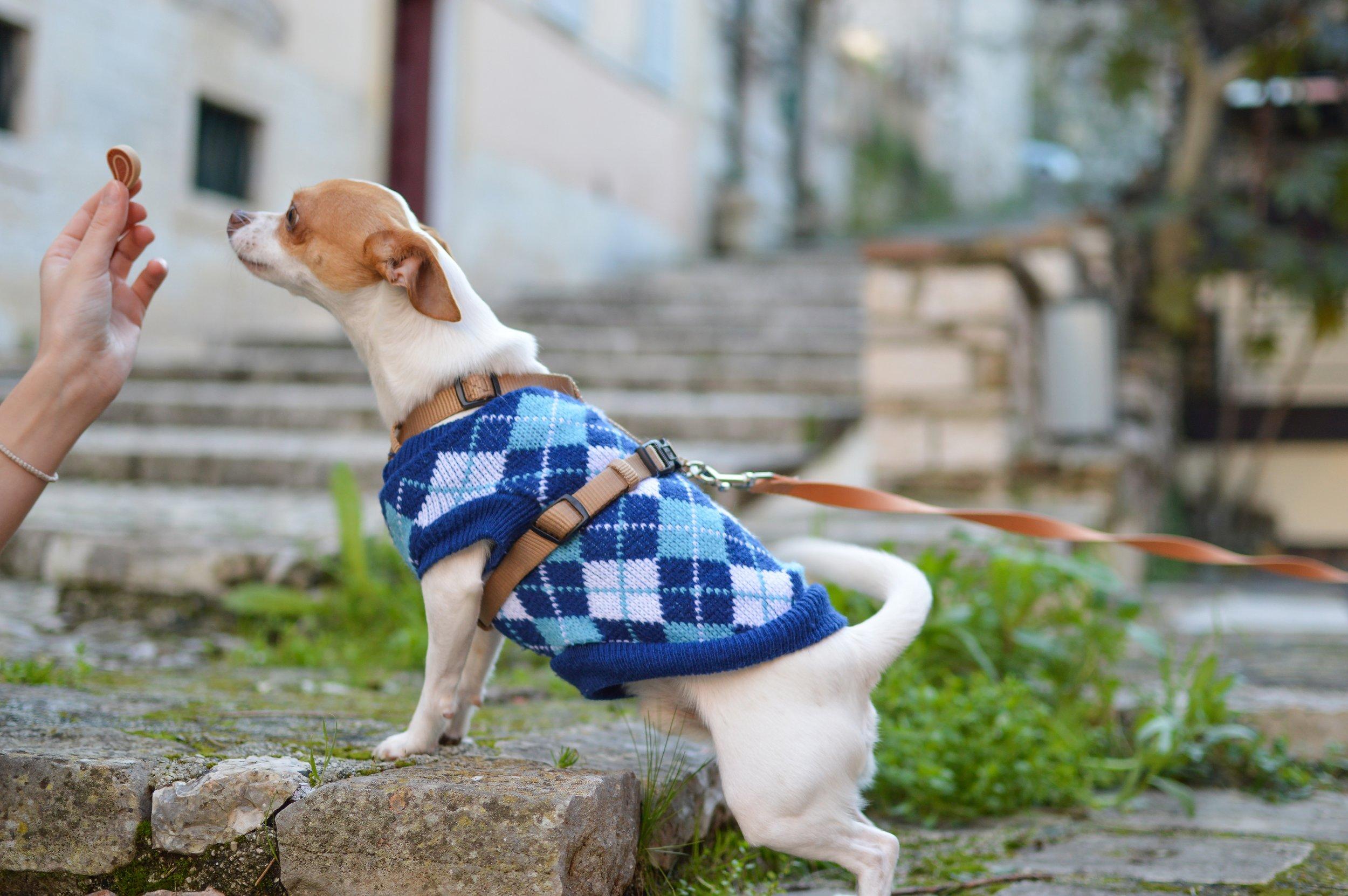 Homeward Bound Animal Care  Dog Training  Dog Treat  Impulse Control/ Self Control  Dog Walking