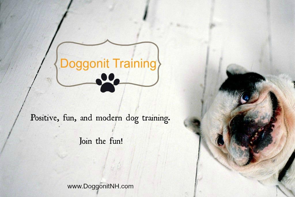 Dog Training NH  Dog Walking NH  Best Pet Care NH