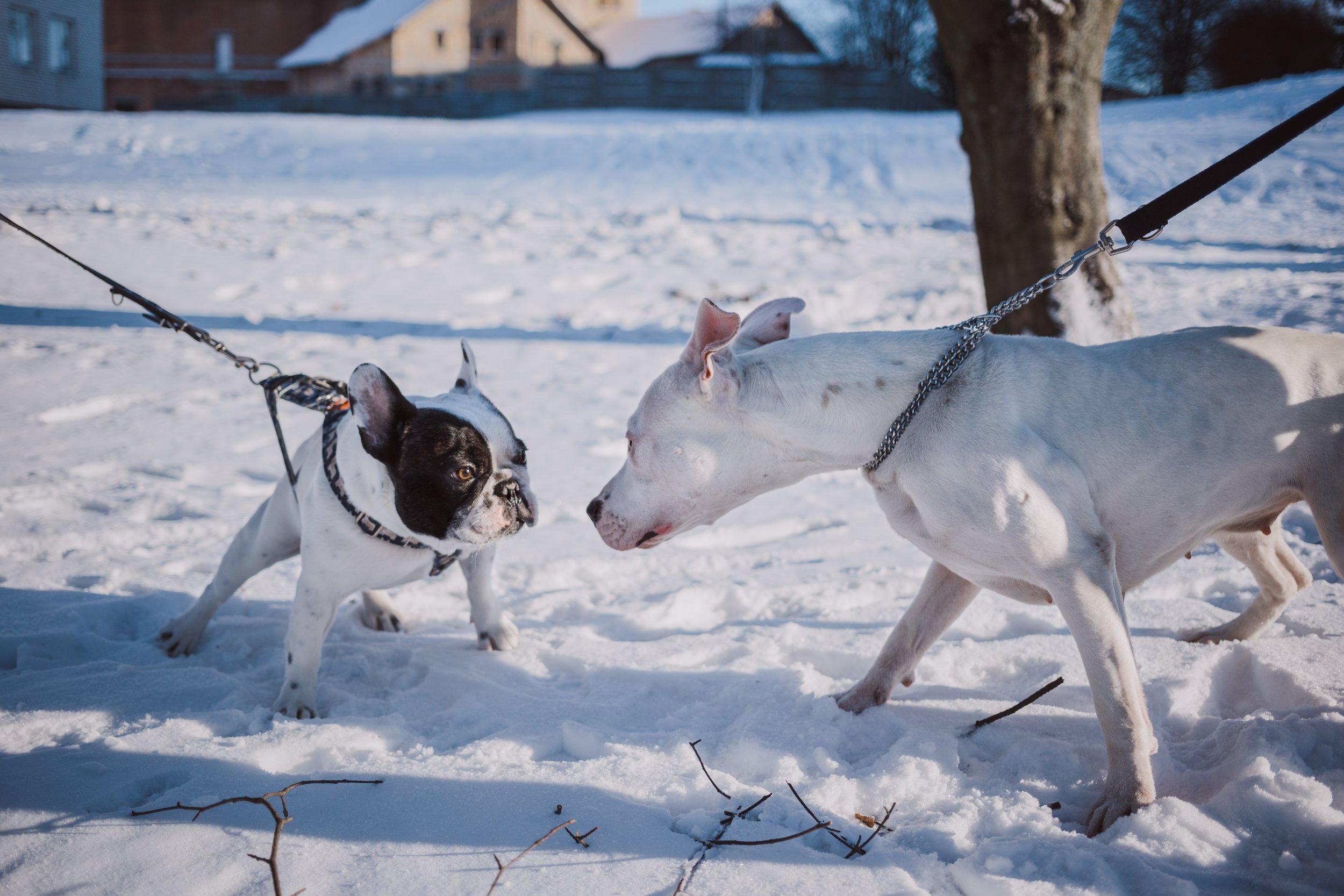 Homeward Bound Animal Care Dog Walking  National Dog Bite Prevention Week  Lakes Region NH